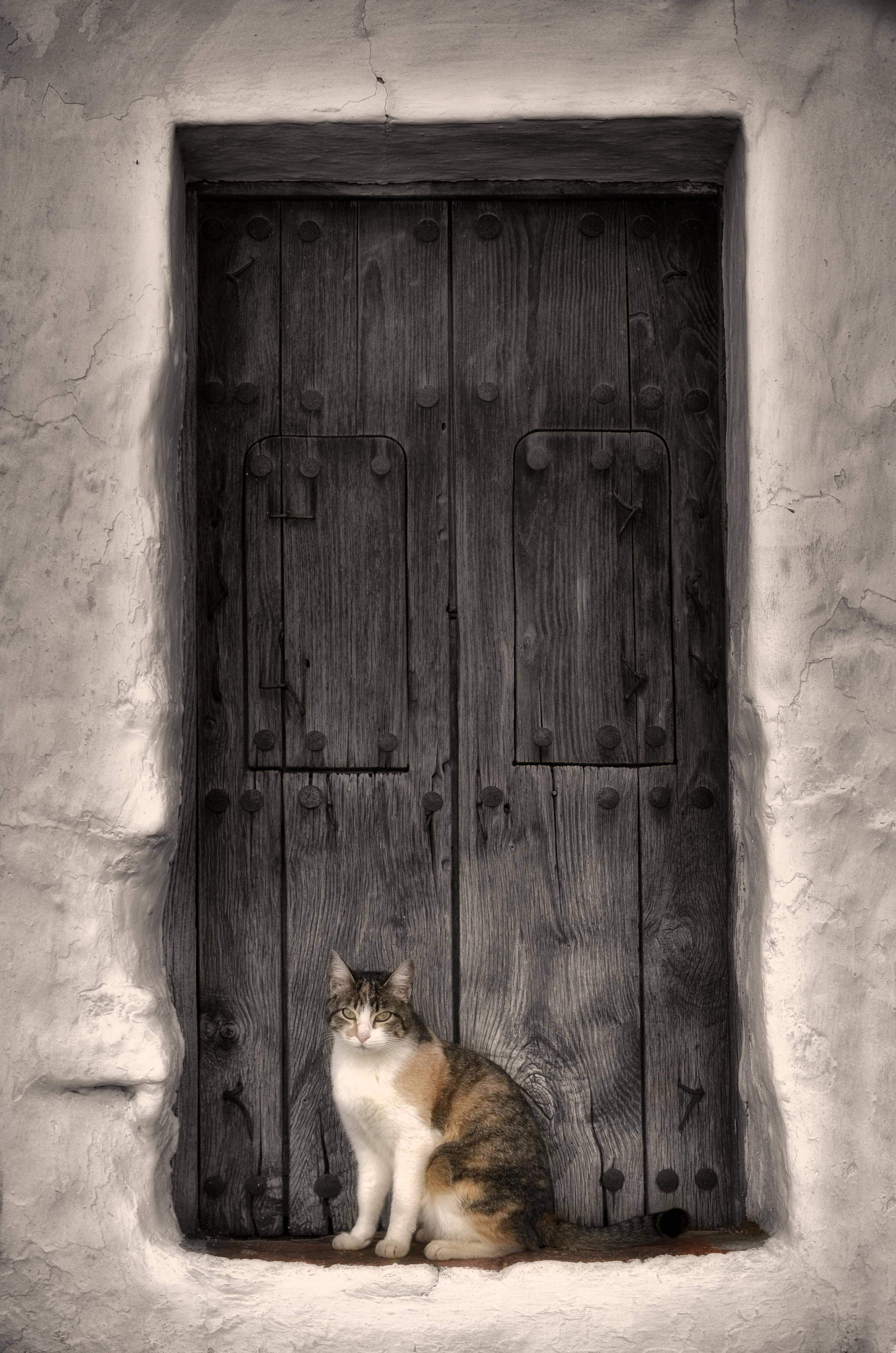 Fotos gratis : en blanco y negro, madera, casa, ventana, pared, gato ...