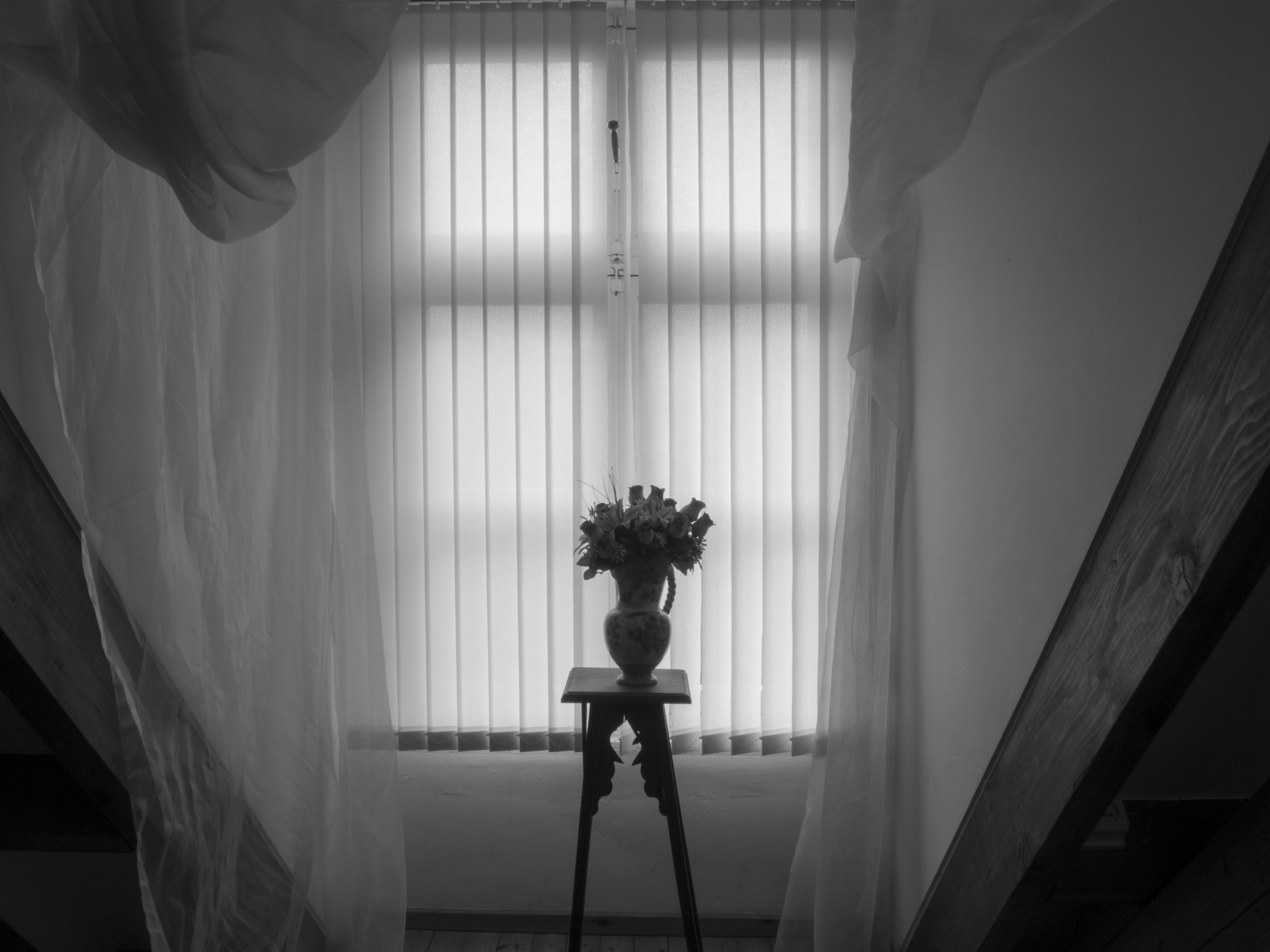 Free Images Blackandwhite Flowers Dramatic Photograph Black