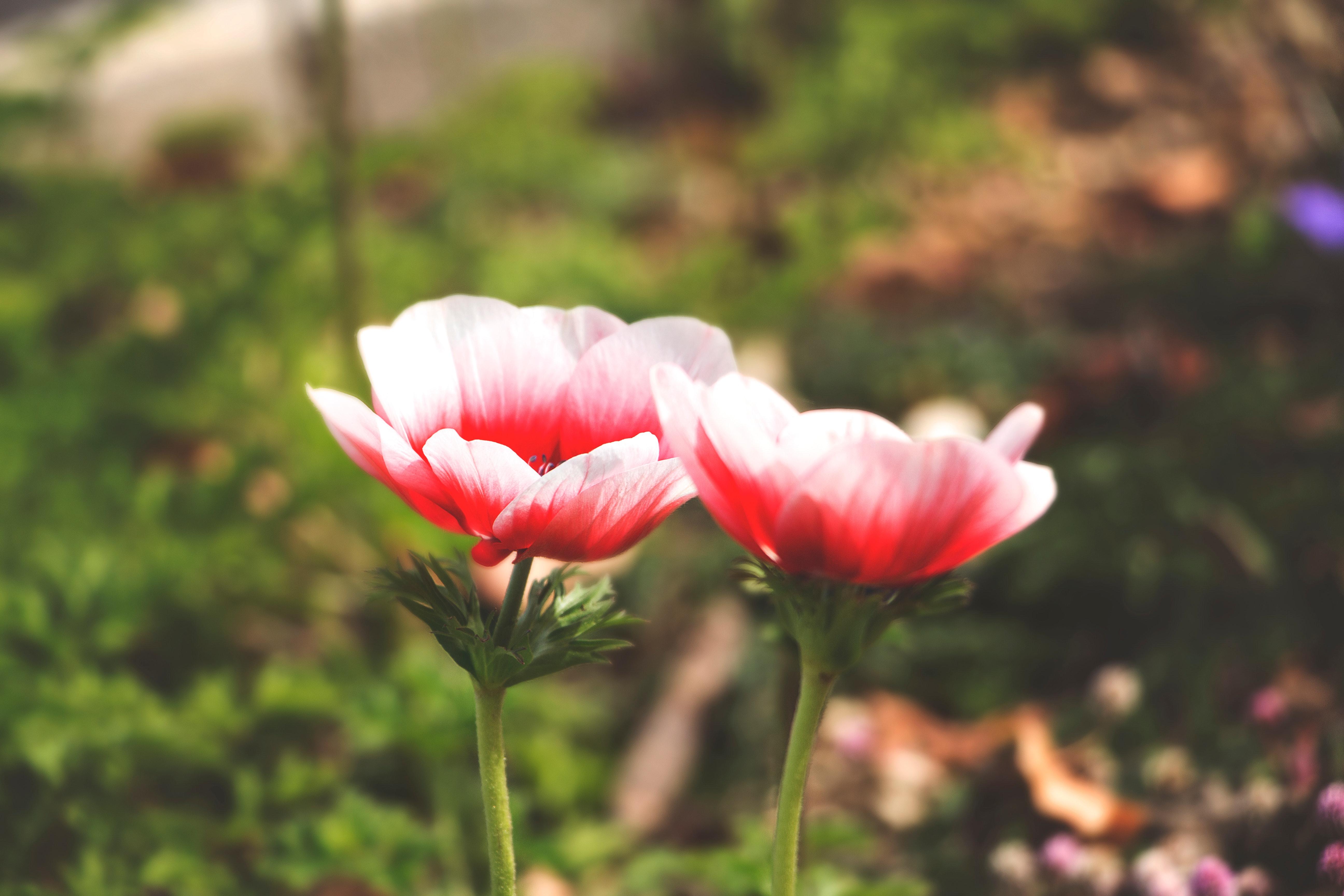 Images Gratuites Floraison Fonds D Ecran Flore Fond D