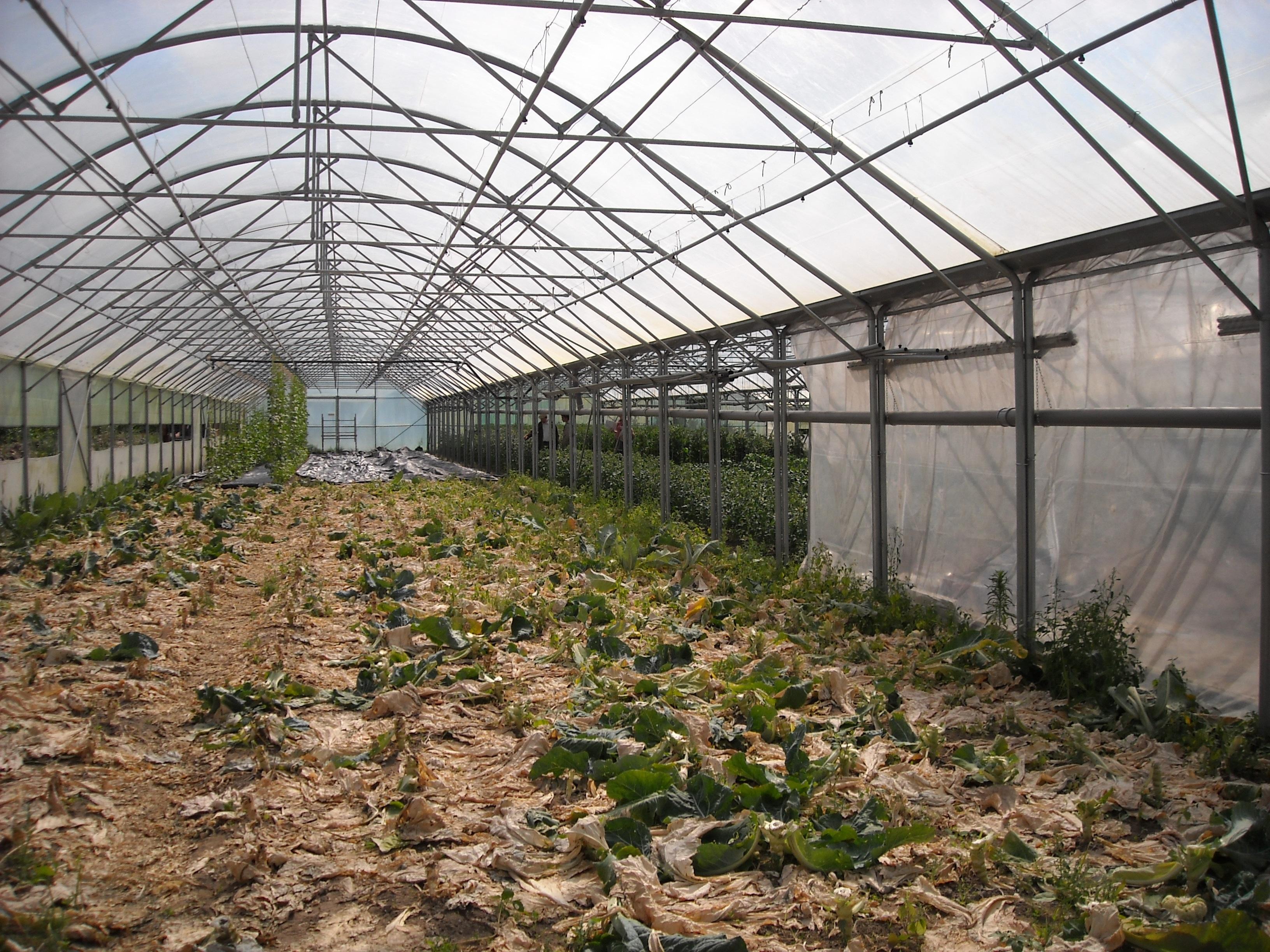 design gardening home landscape garden greenhouse