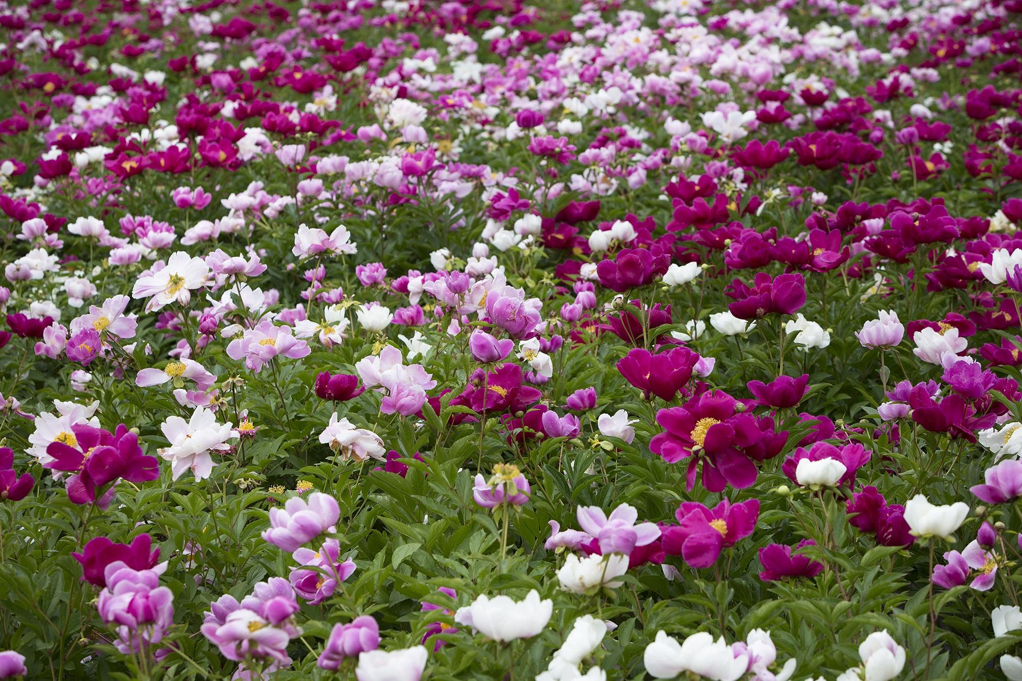 Images Gratuites : fleur, abstrait, pelouse, Prairie, flore ...