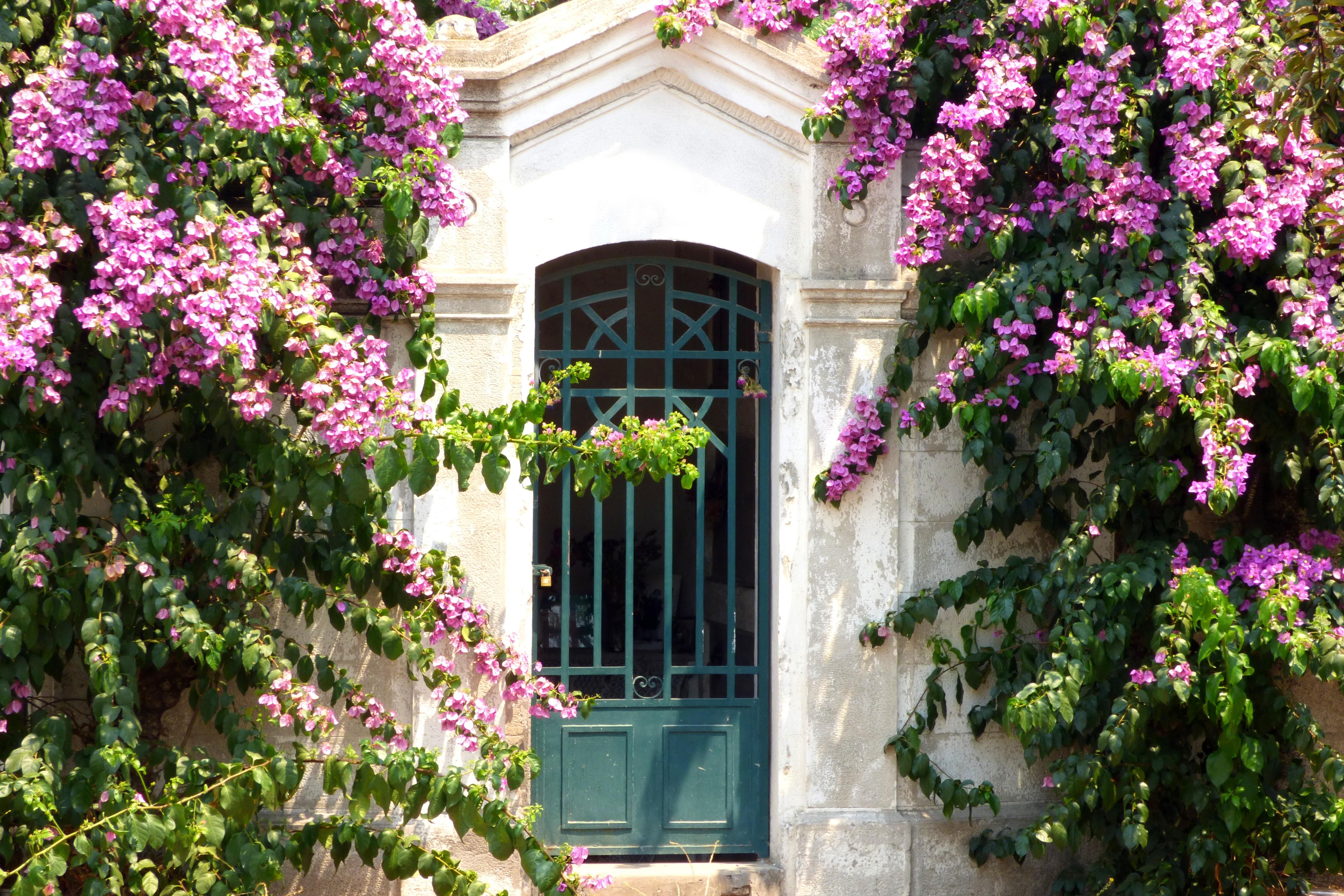 Gambar mekar menanam rumah bunga gambar mekar menanam Home mekar