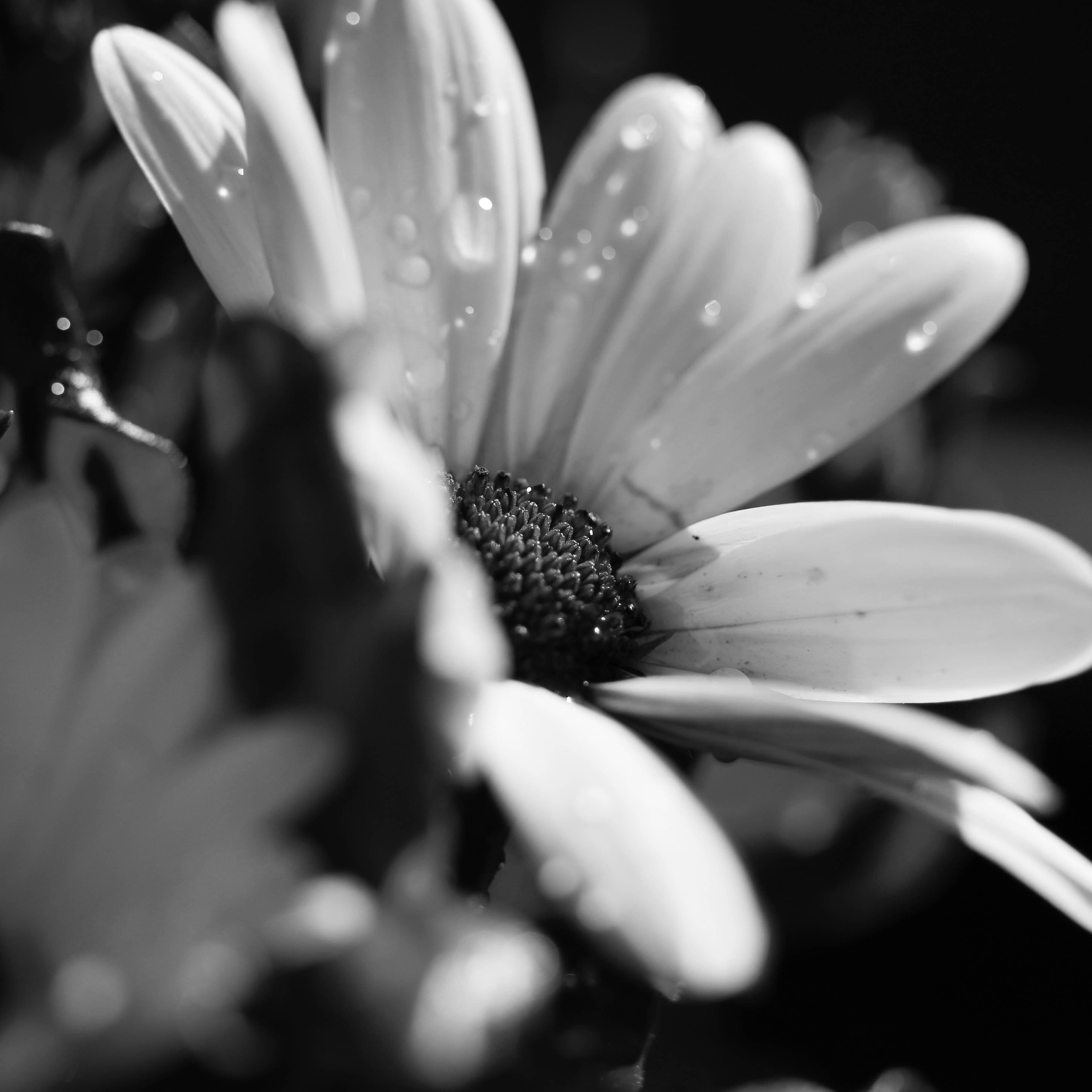 blanco negro cerca