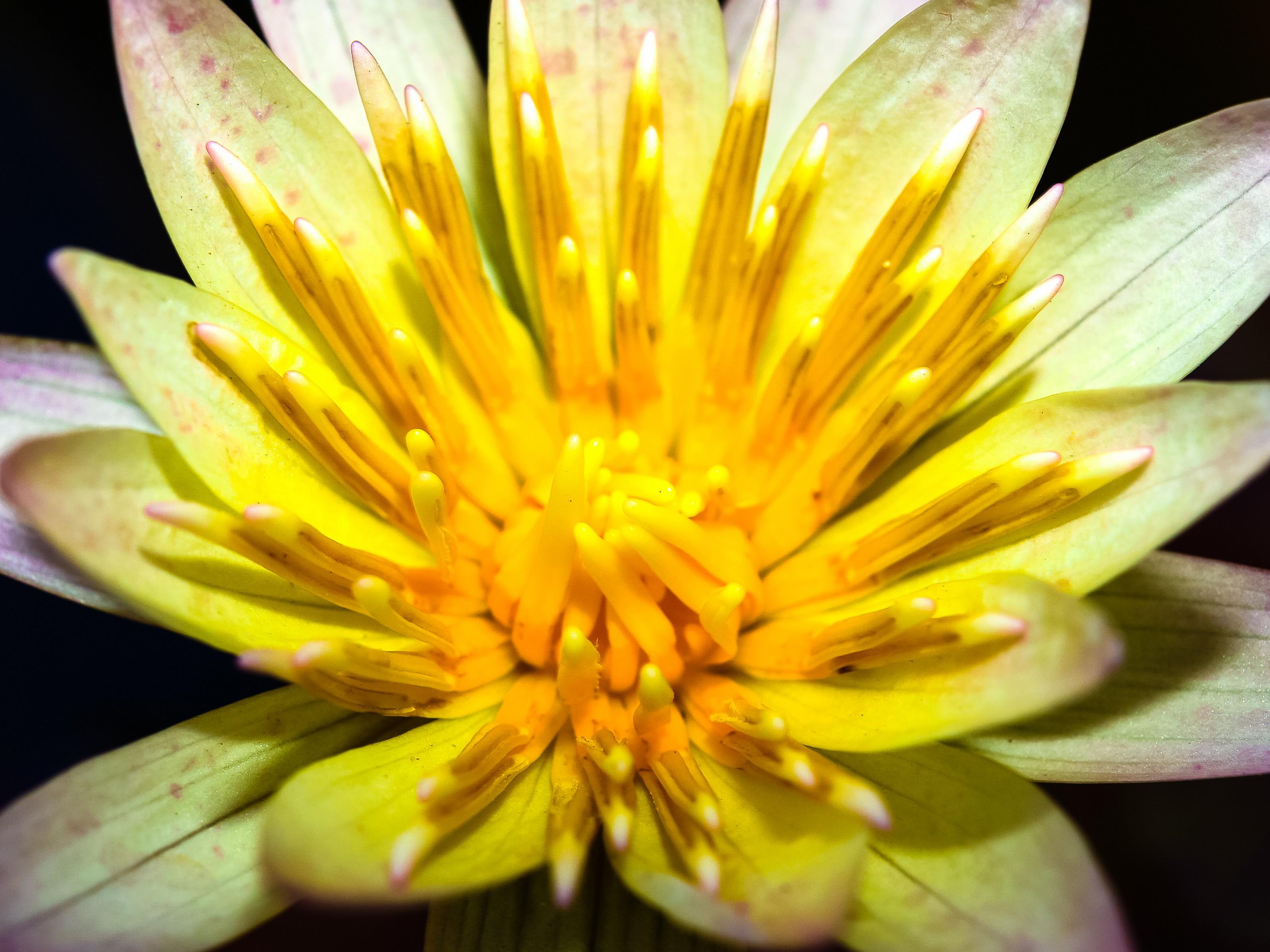 Gratis billeder : blomst, blå, botanisk, lyse, lyst, farve, farvet ...
