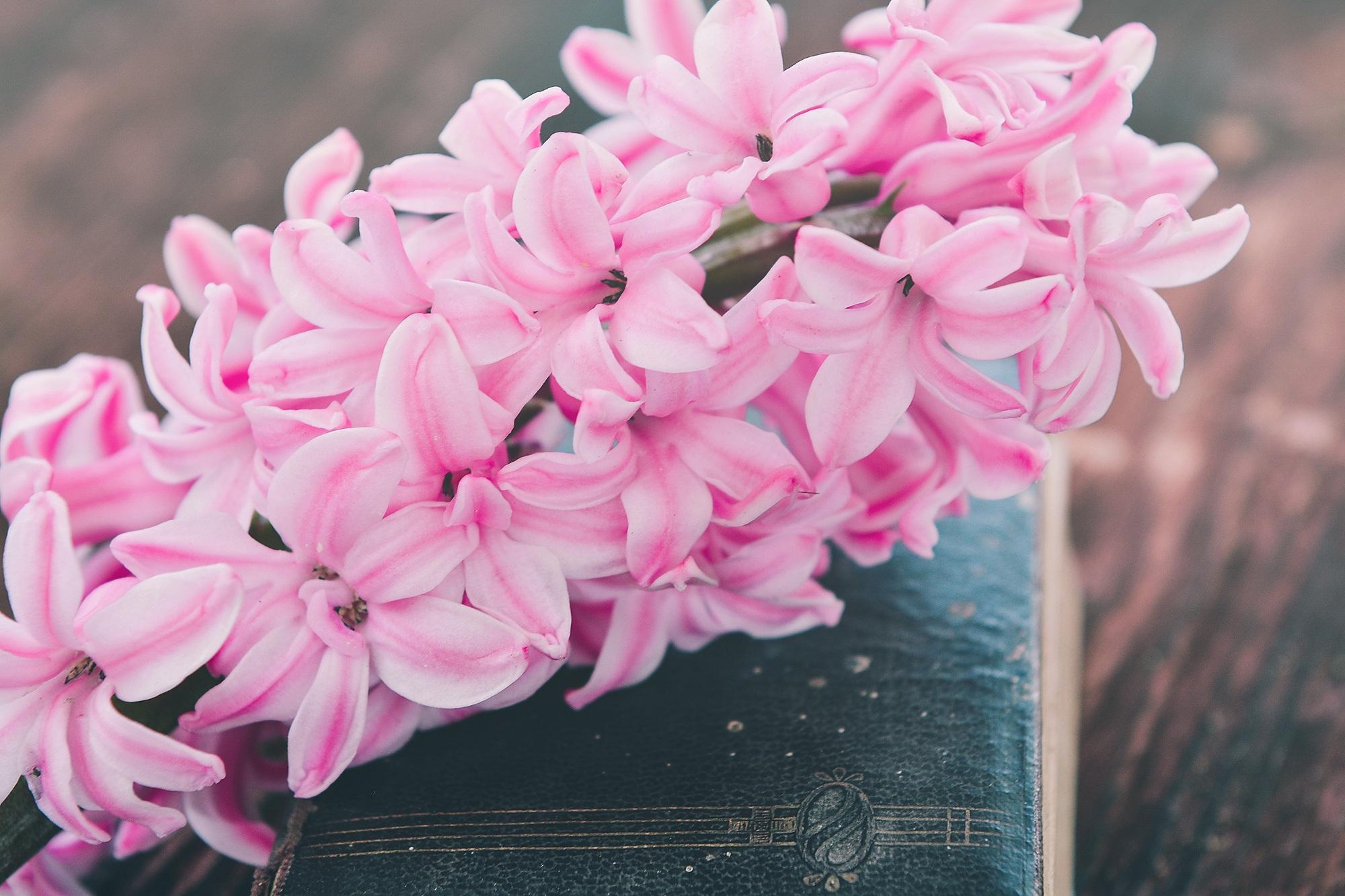 Free Images Blossom Wood Petal Pink Close Flora Old Book