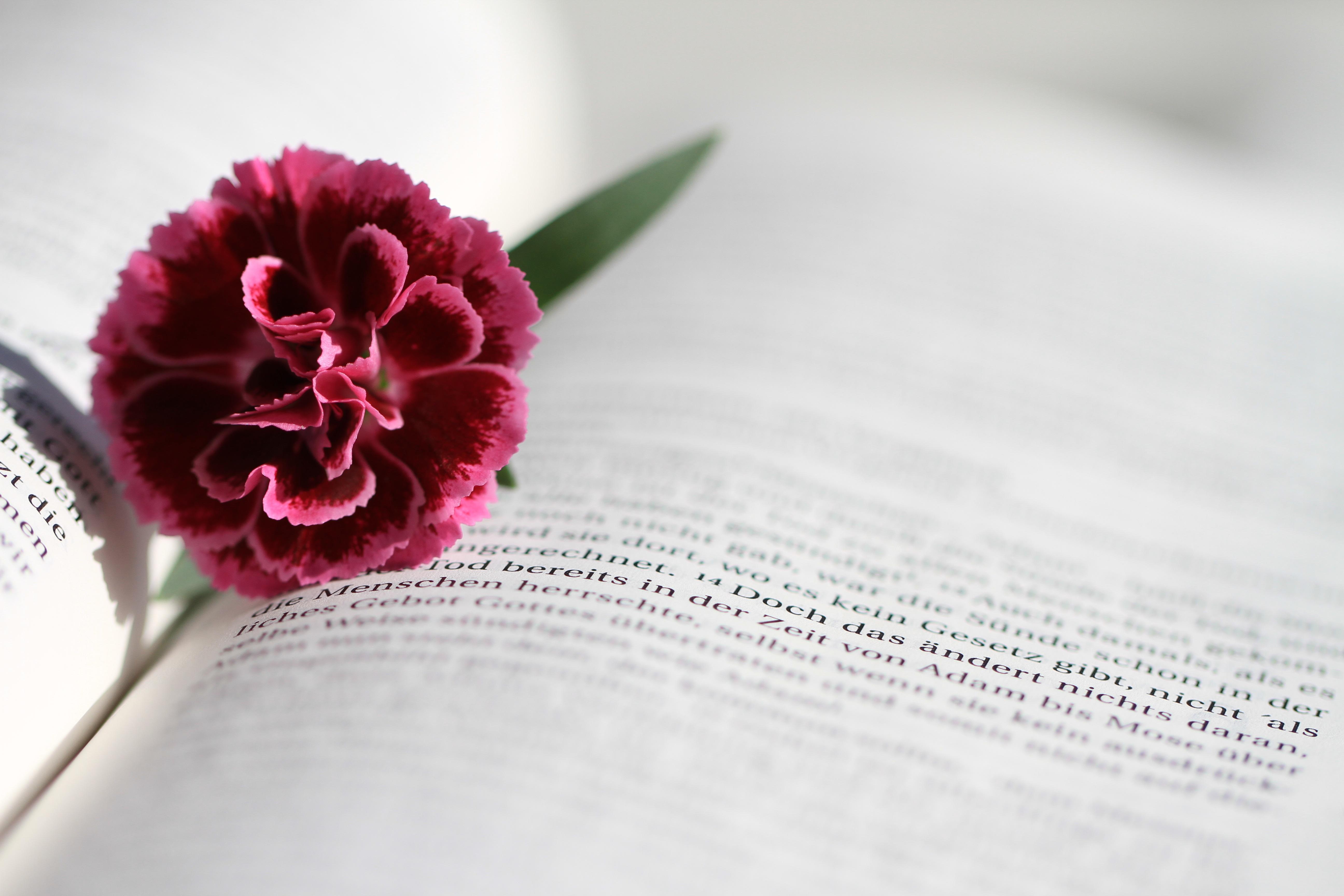 Fotos gratis : flor, libro, leer, fotografía, pétalo, florecer ...