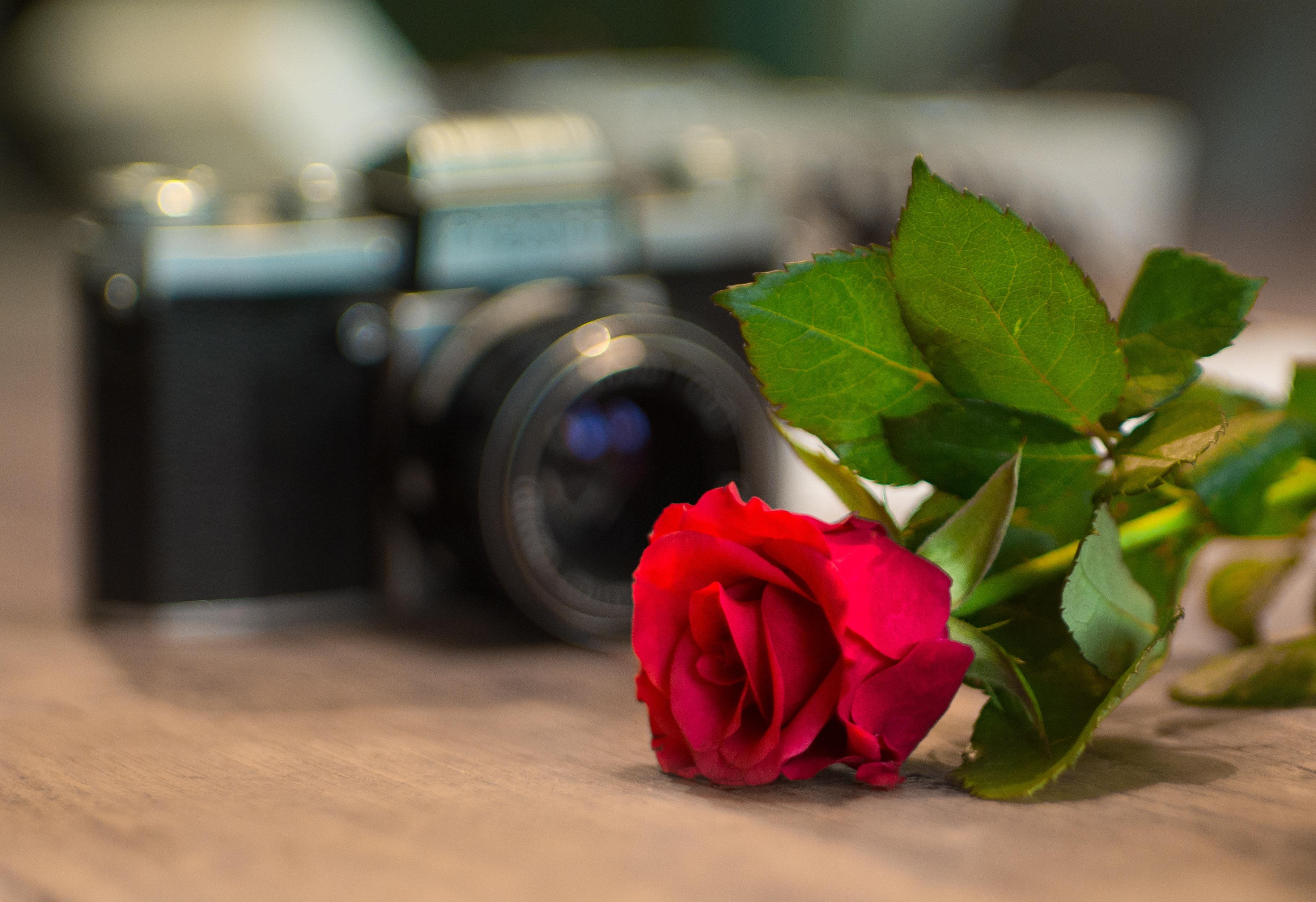Gambar Mekar Vintage Bunga Analog Bunga Perayaan