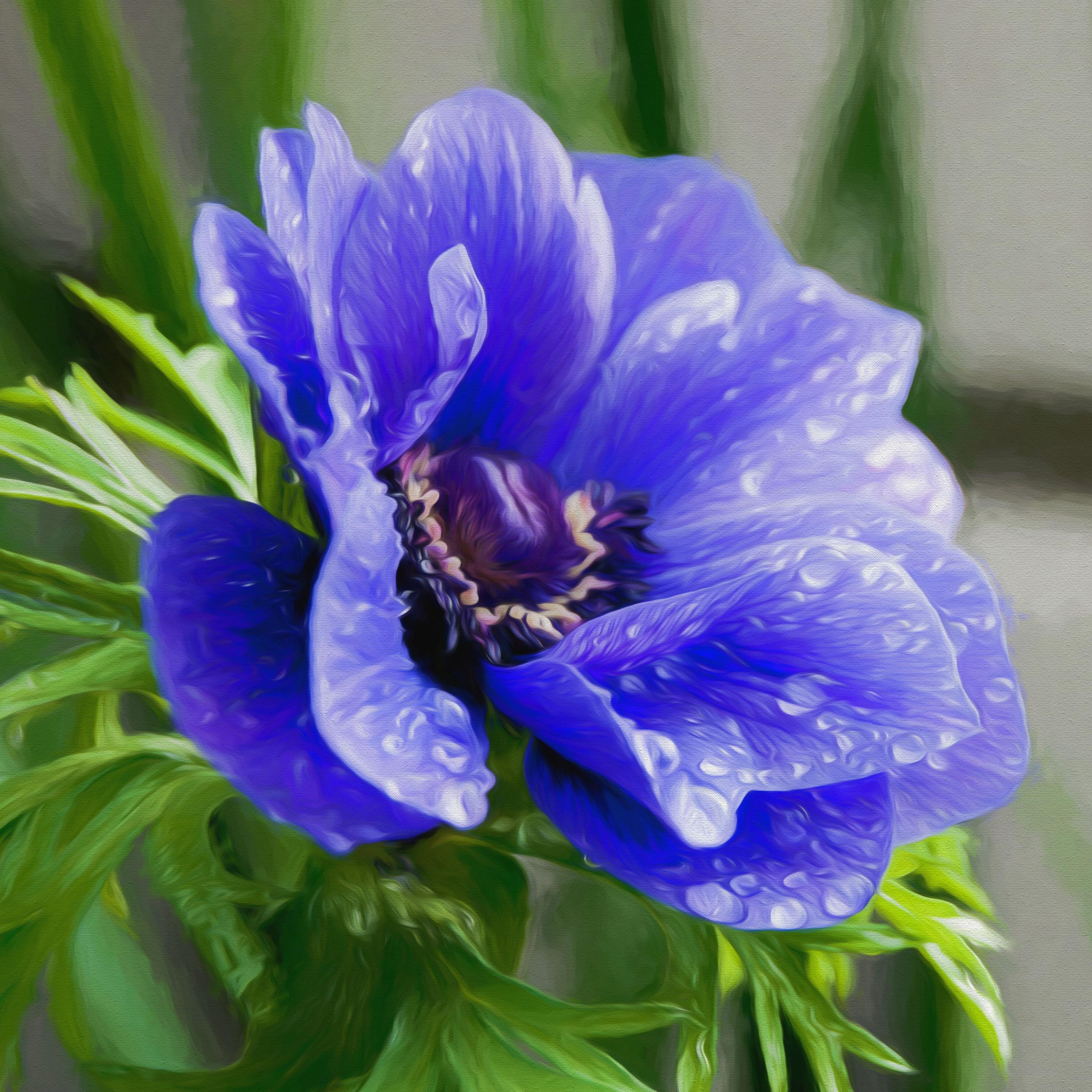 верная картинка синенькие цветы они