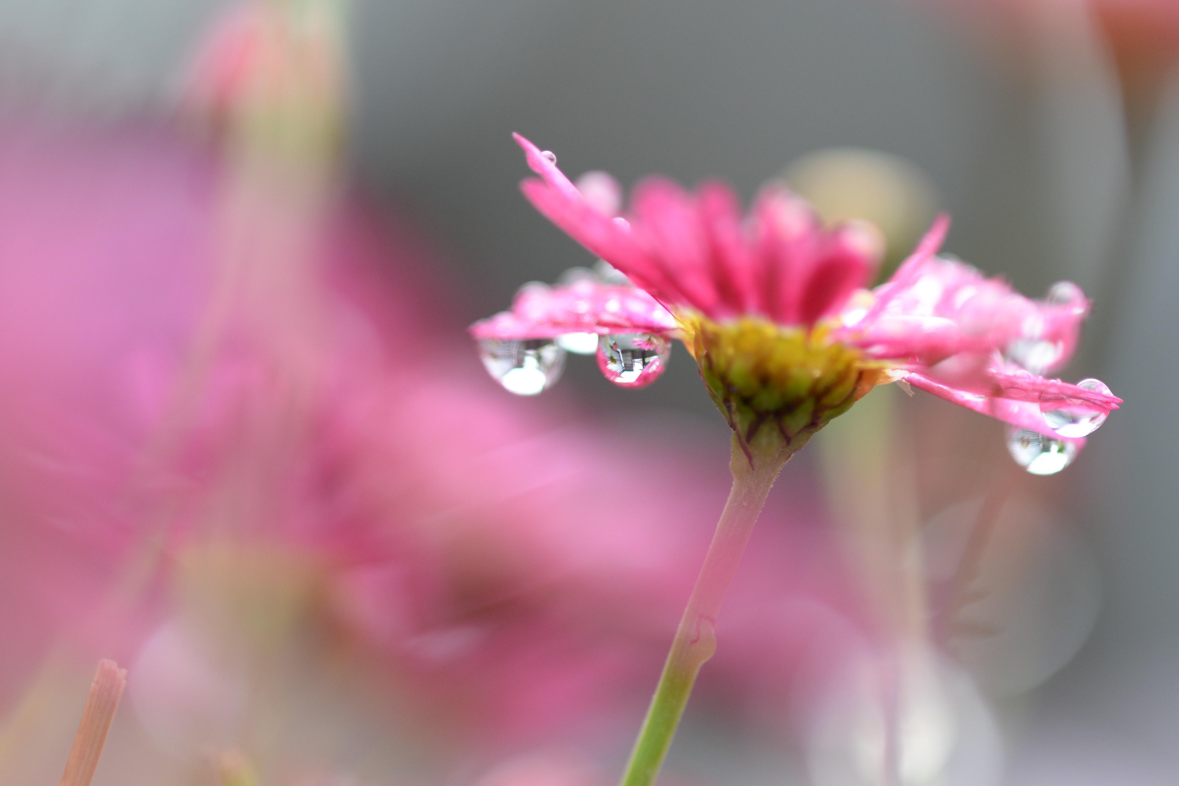 Цветок капли размытость без смс
