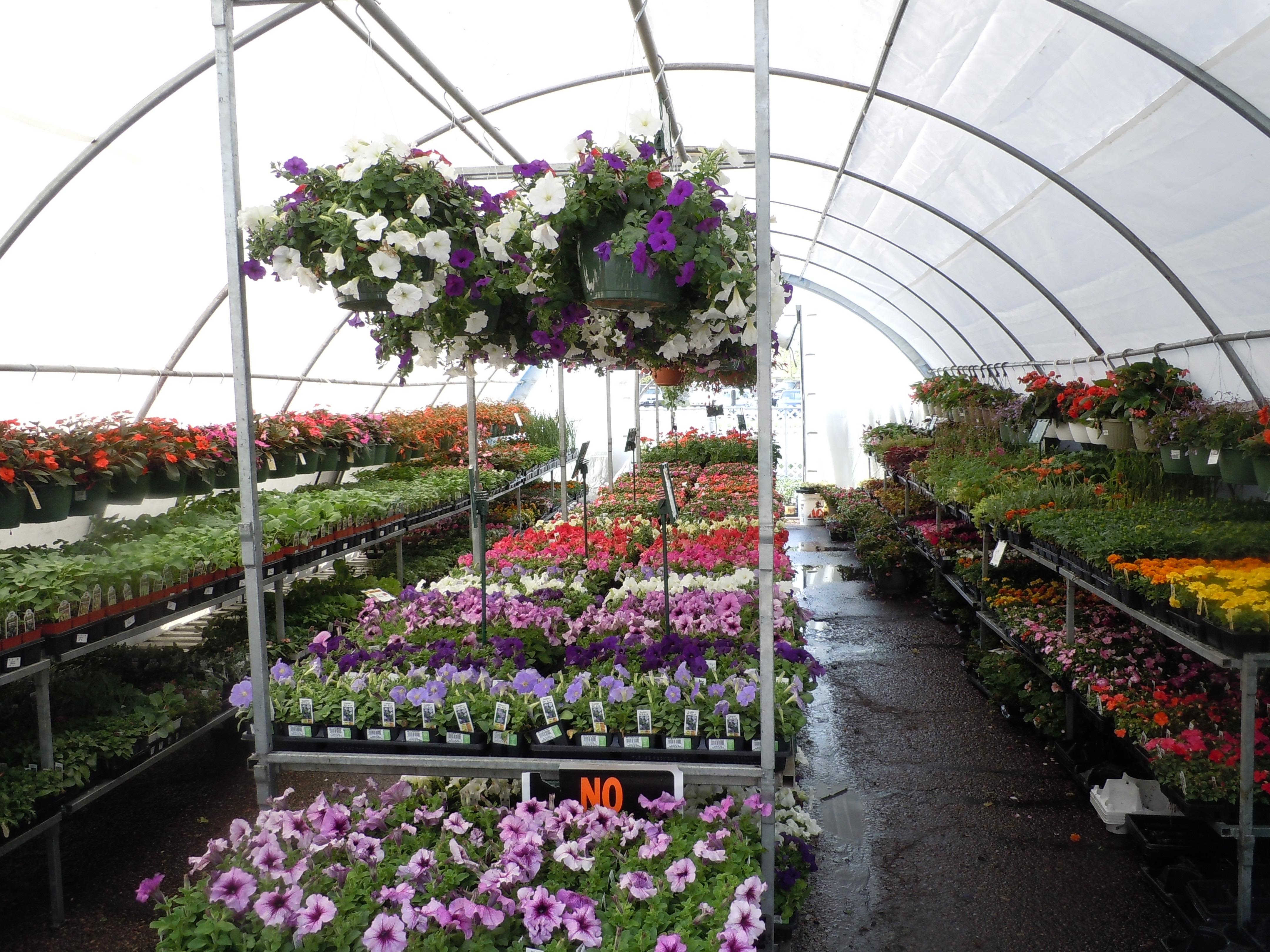 Fotos gratis flor crecimiento florecer herramienta for Estructura vivero