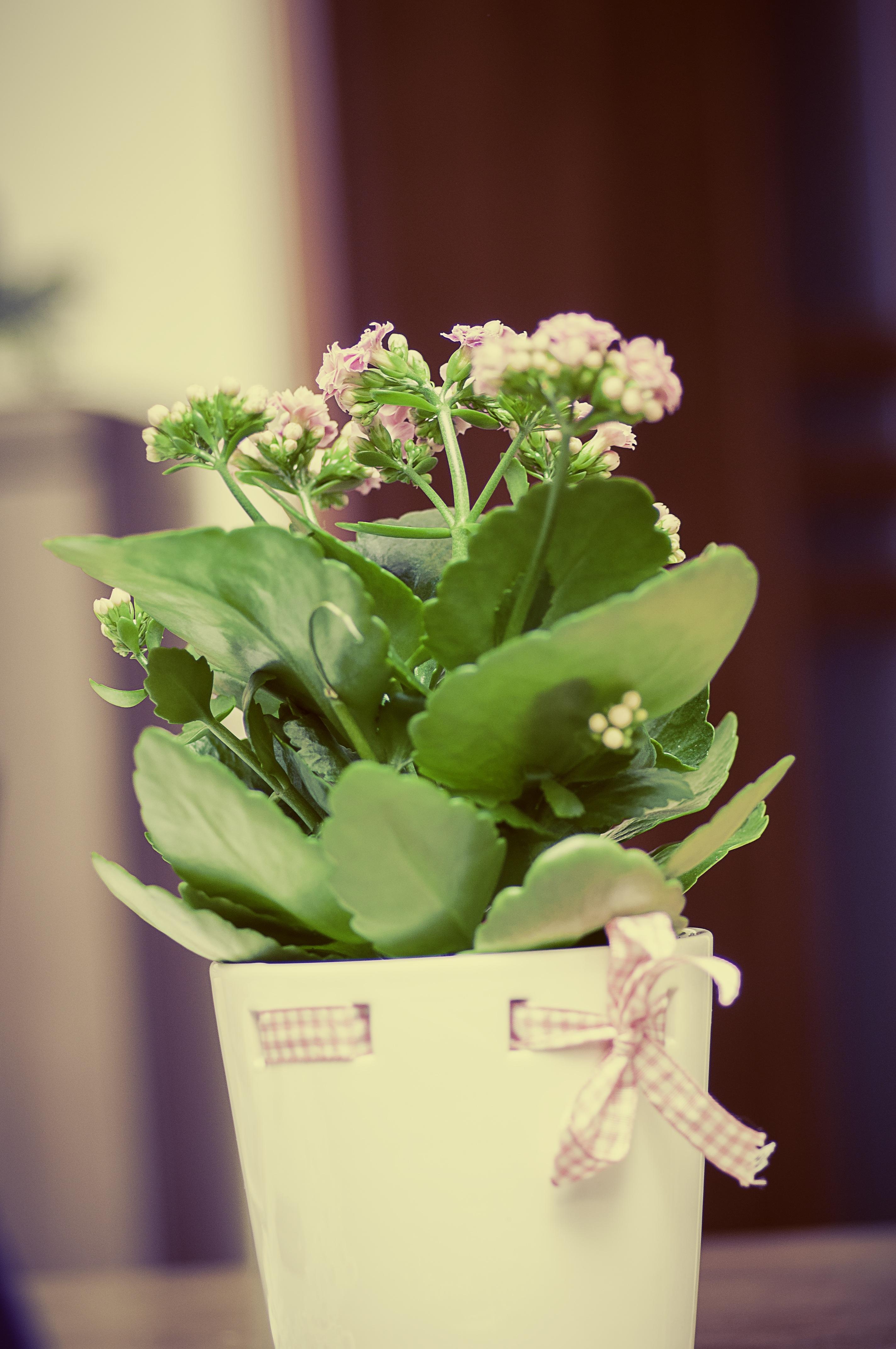 Images gratuites fleur croissance p tale int rieur for Cadeau decoration interieur