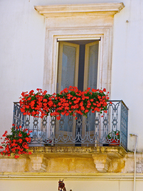 Kostenlose Foto Bl Hen Haus Blume Fenster Mauer