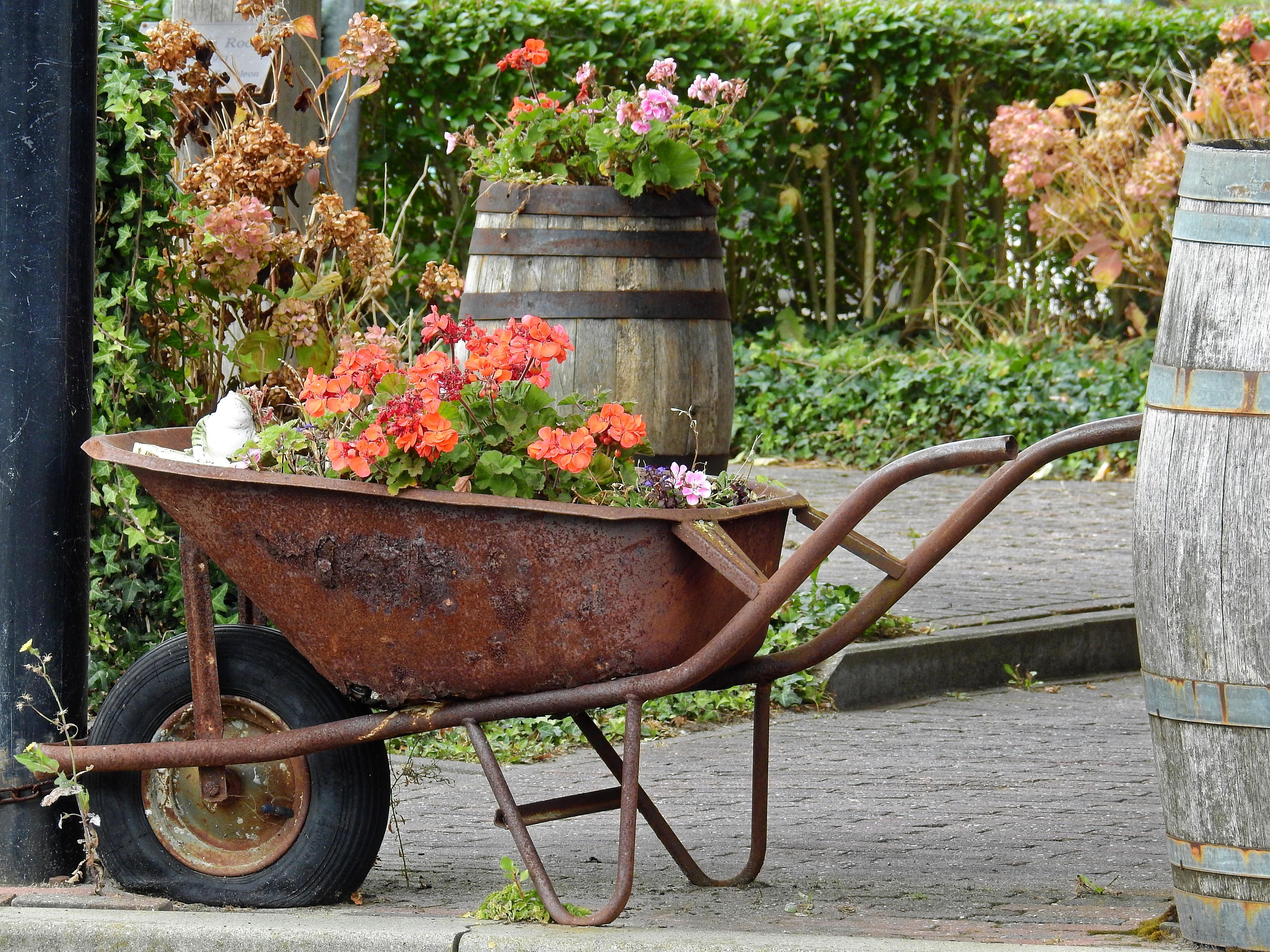 blossom lawn cart flower bloom old tool decoration vehicle backyard garden barrel deco decorative yard stainless wheelbarrow wooden barrels man made object