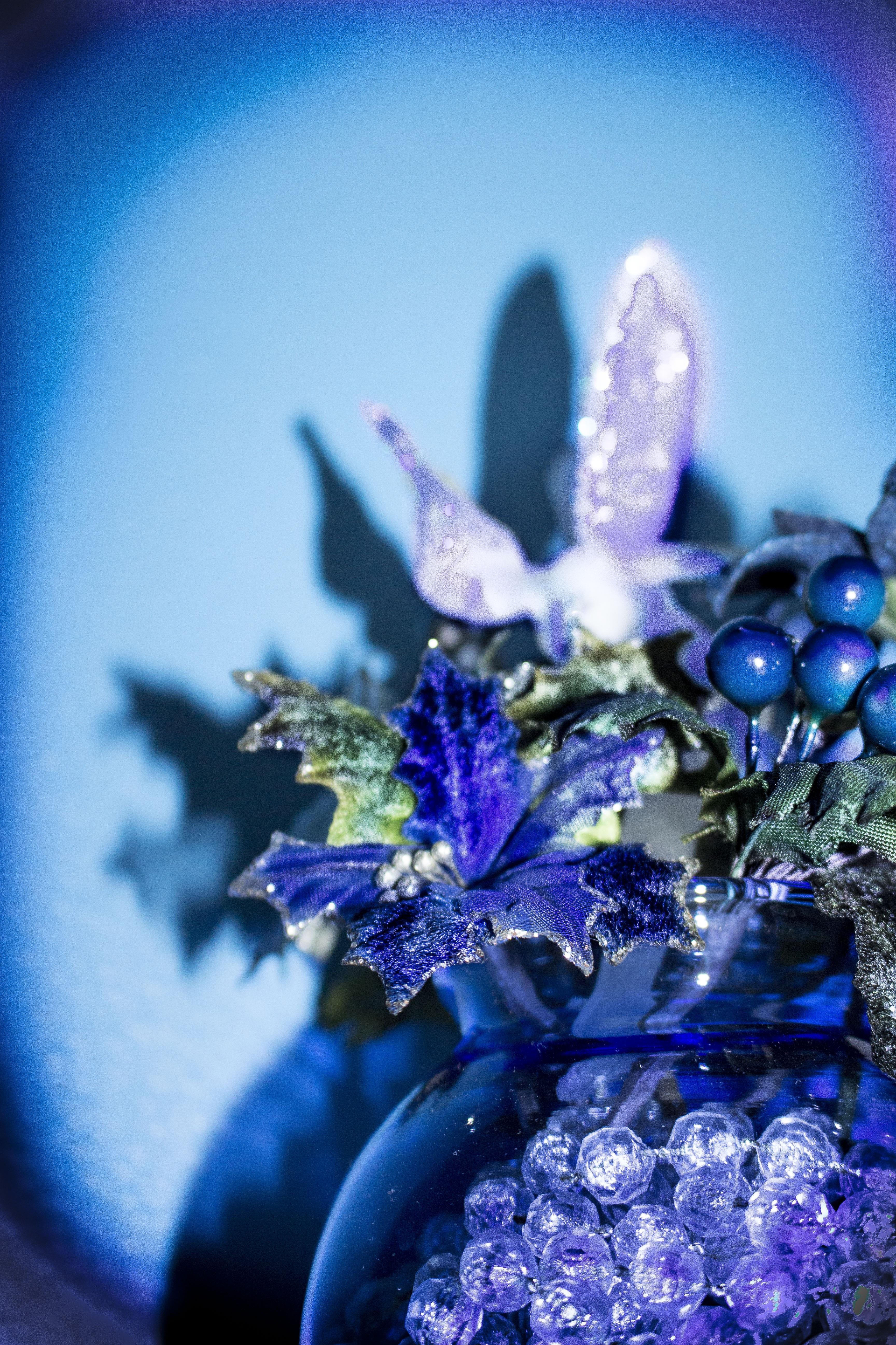 images gratuites fleur lumi re la photographie violet p tale couleur bleu no l d cor. Black Bedroom Furniture Sets. Home Design Ideas