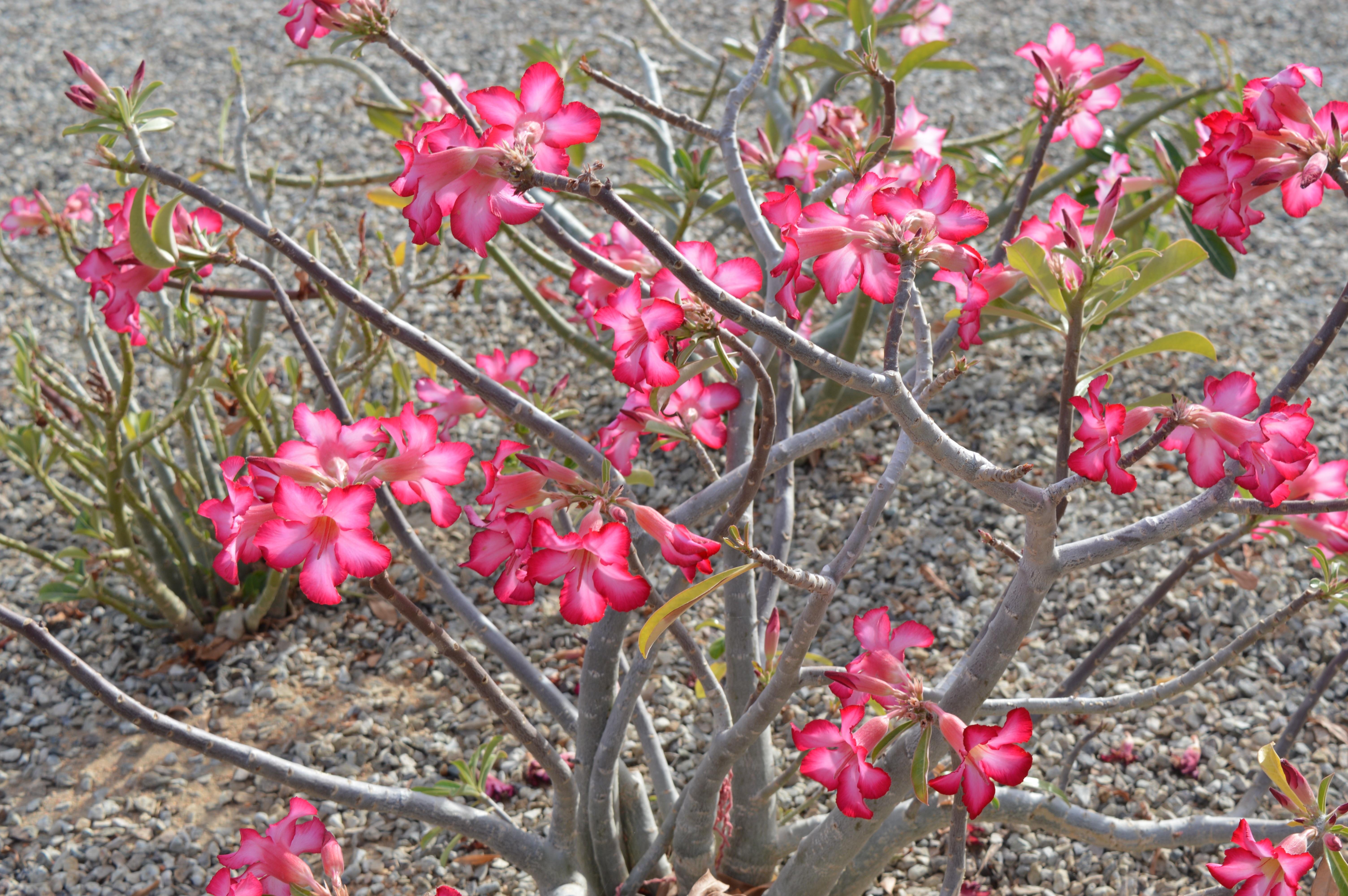 Images Gratuites Fleur Desert Floraison Produire Botanique
