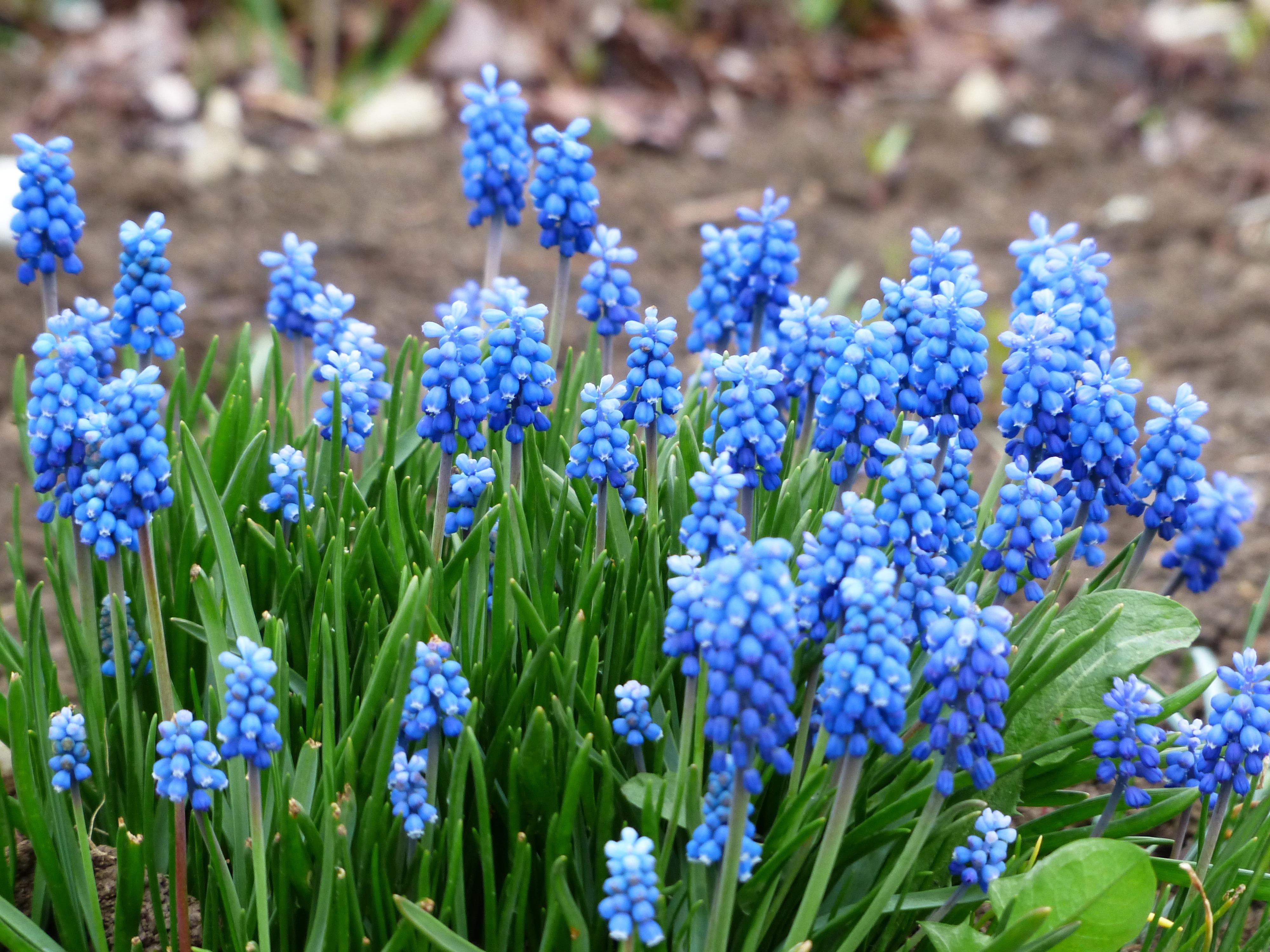 весенние цветы в саду названия и фото собрала подборку