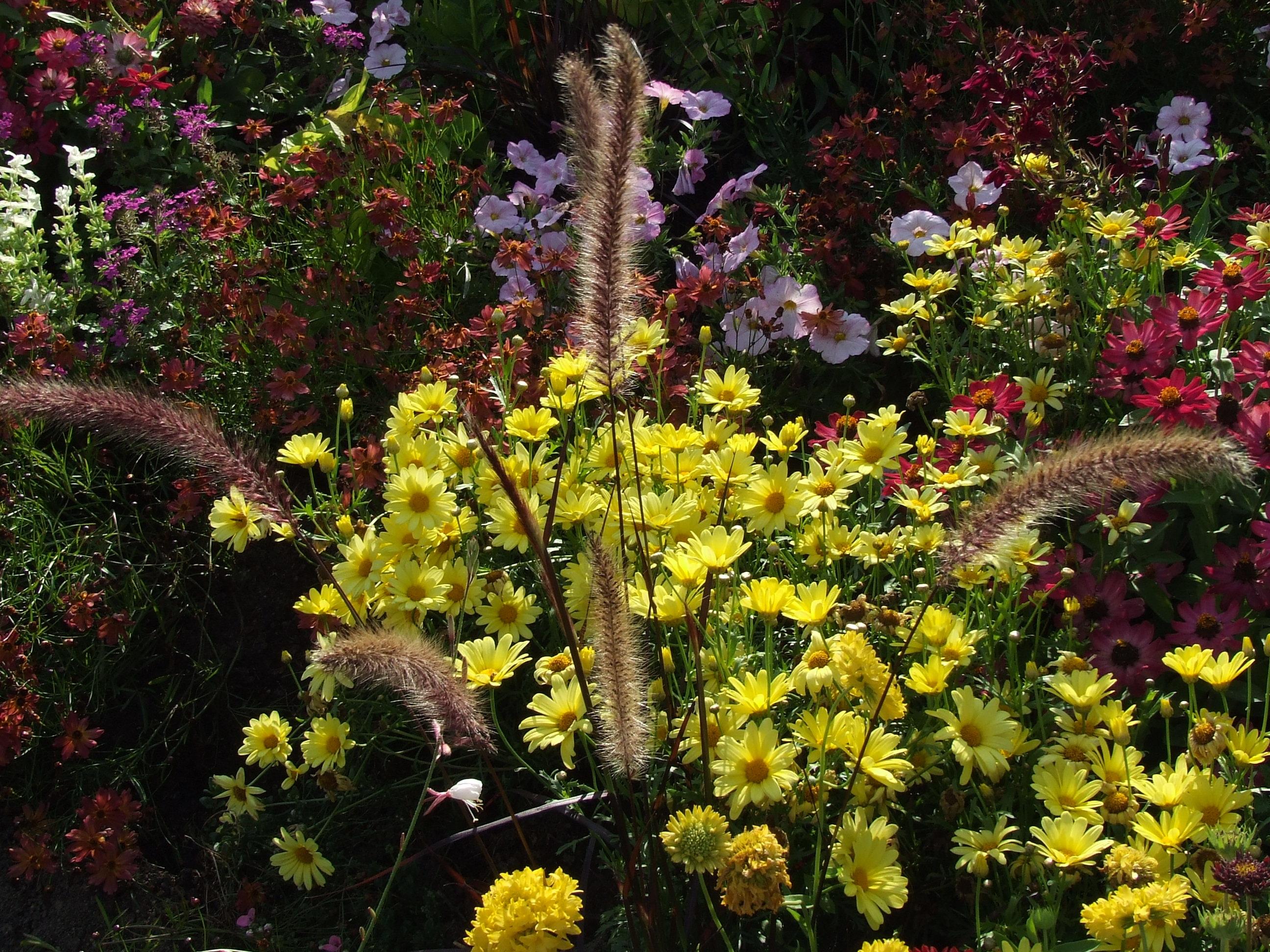 Images gratuites fleur l 39 automne botanique color for Plante arbuste