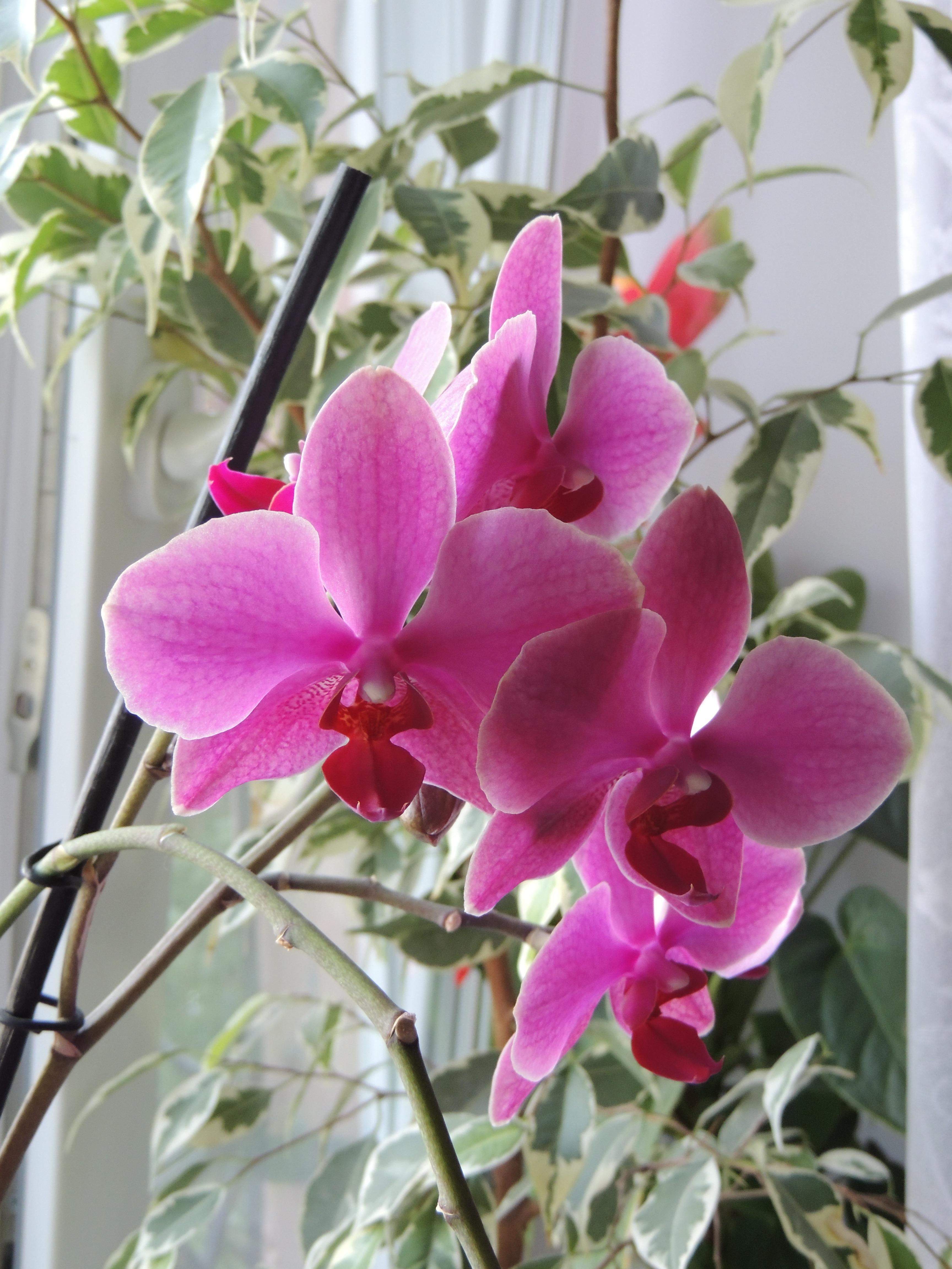 Free images blossom bloom botany flora plants flowers beauty blossom plant flower bloom botany flora plants orchid flowers beauty krupnyj plan beautiful flower flowering plant izmirmasajfo