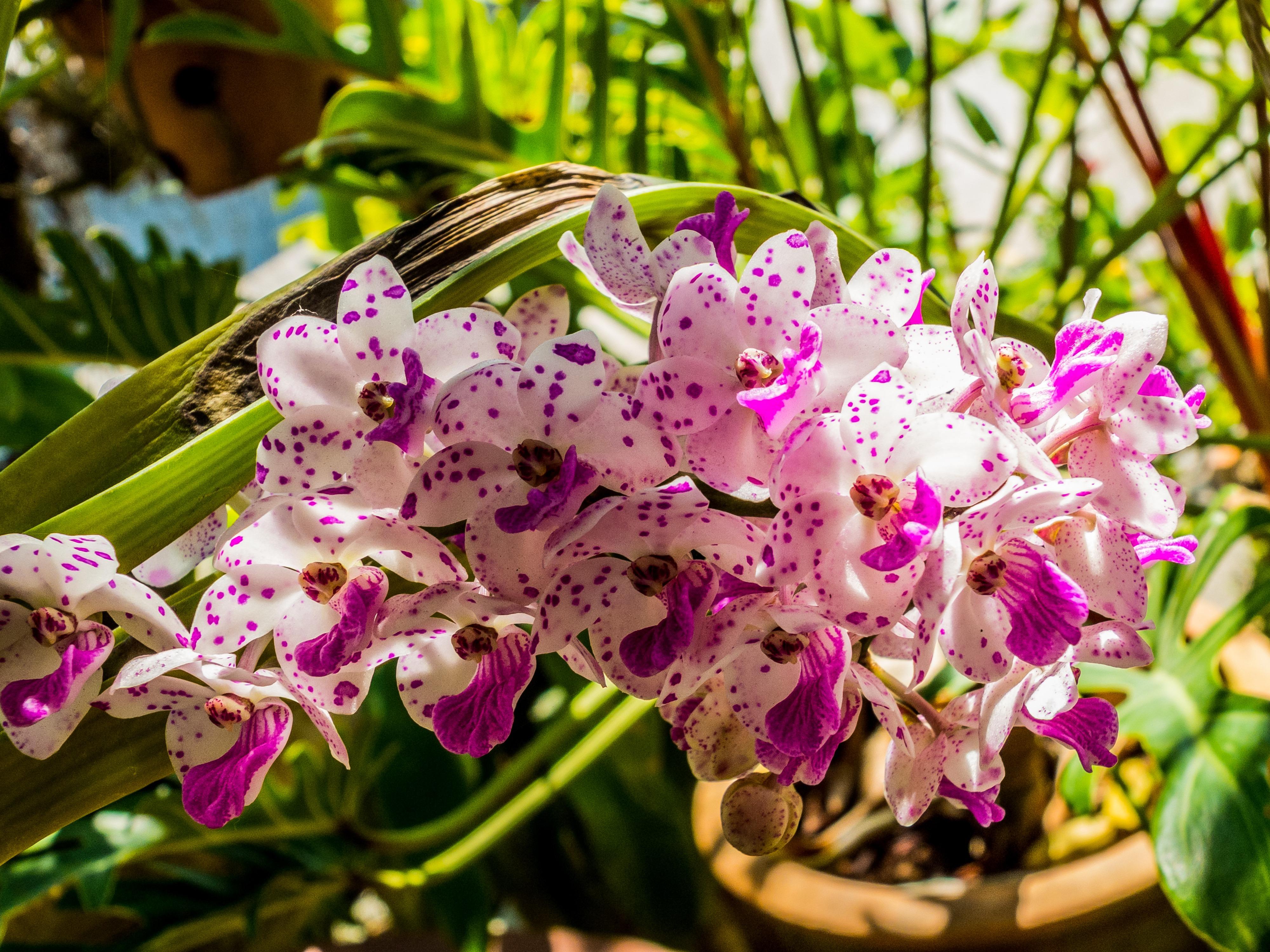 орхидея с мелкими цветами название небольшие группы туристов