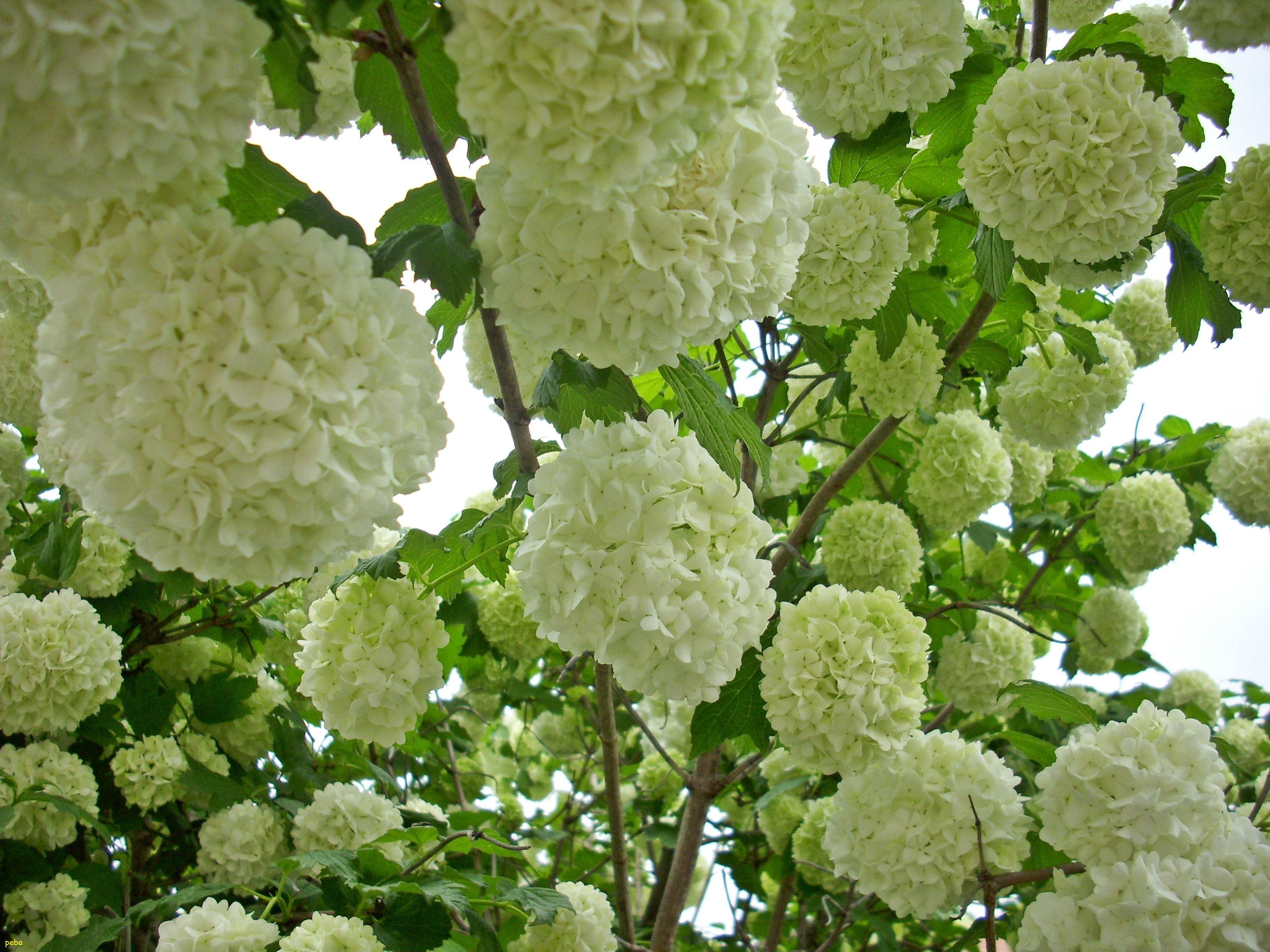Kostenlose Foto Blühen Blume Busch Produzieren Botanik