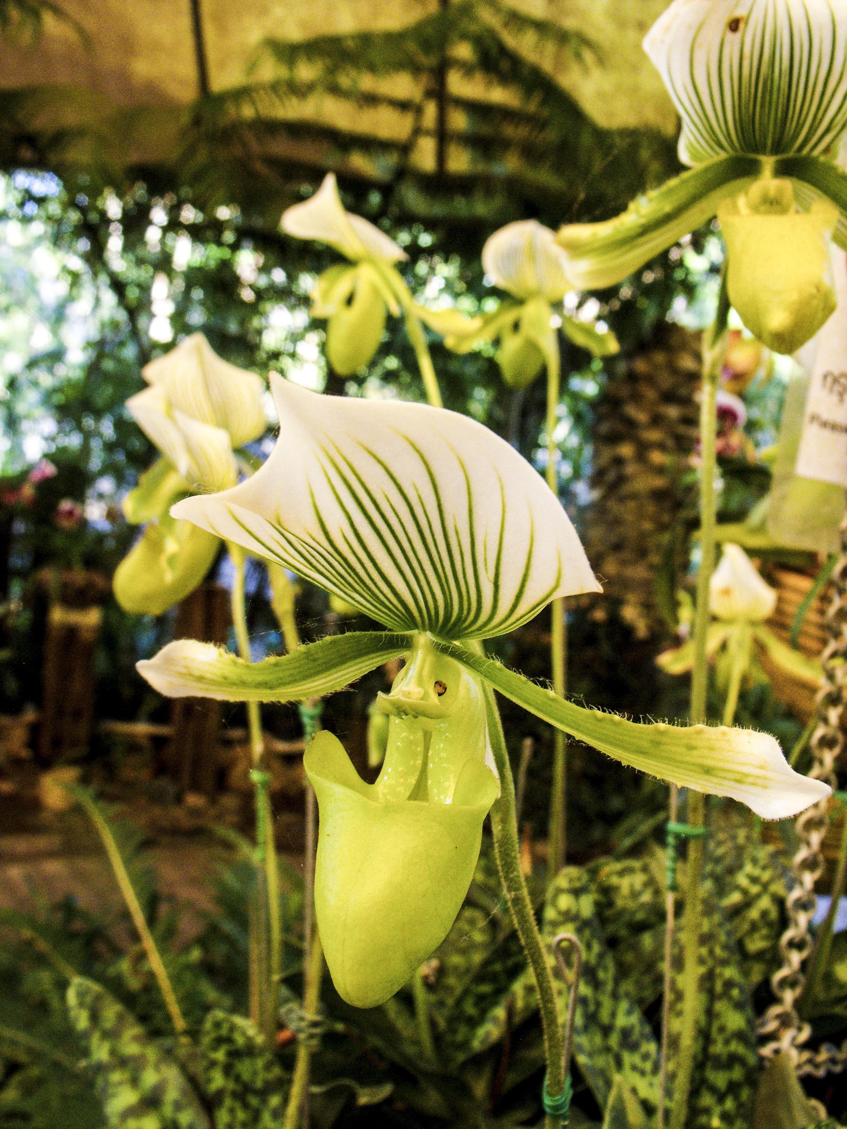 Kostenlose Foto Blühen Blume Grün Botanik Gelb Garten Flora