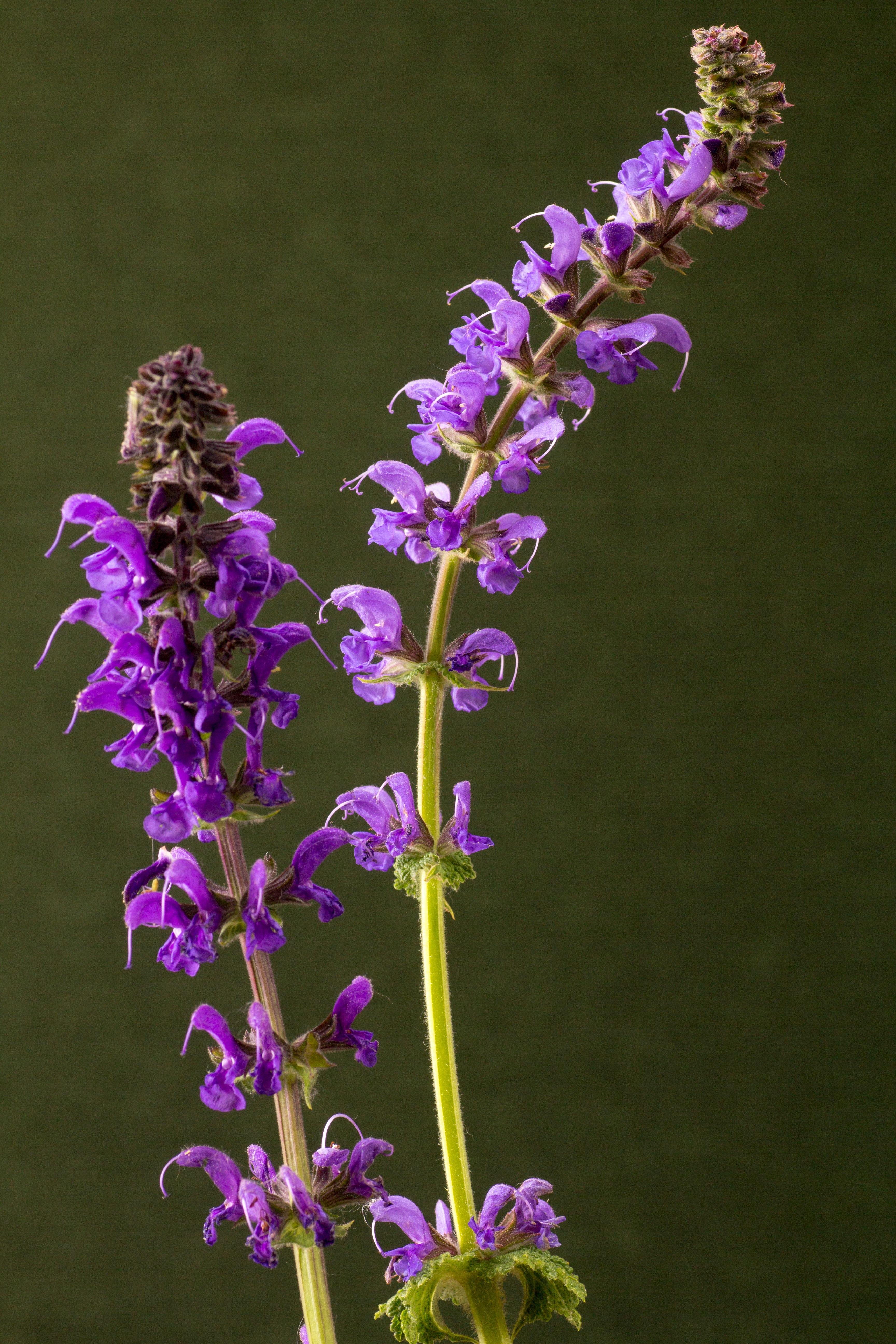hình ảnh : thực vật, Cây cỏ, Thực vật học, Hệ thực vật, Hoa ...