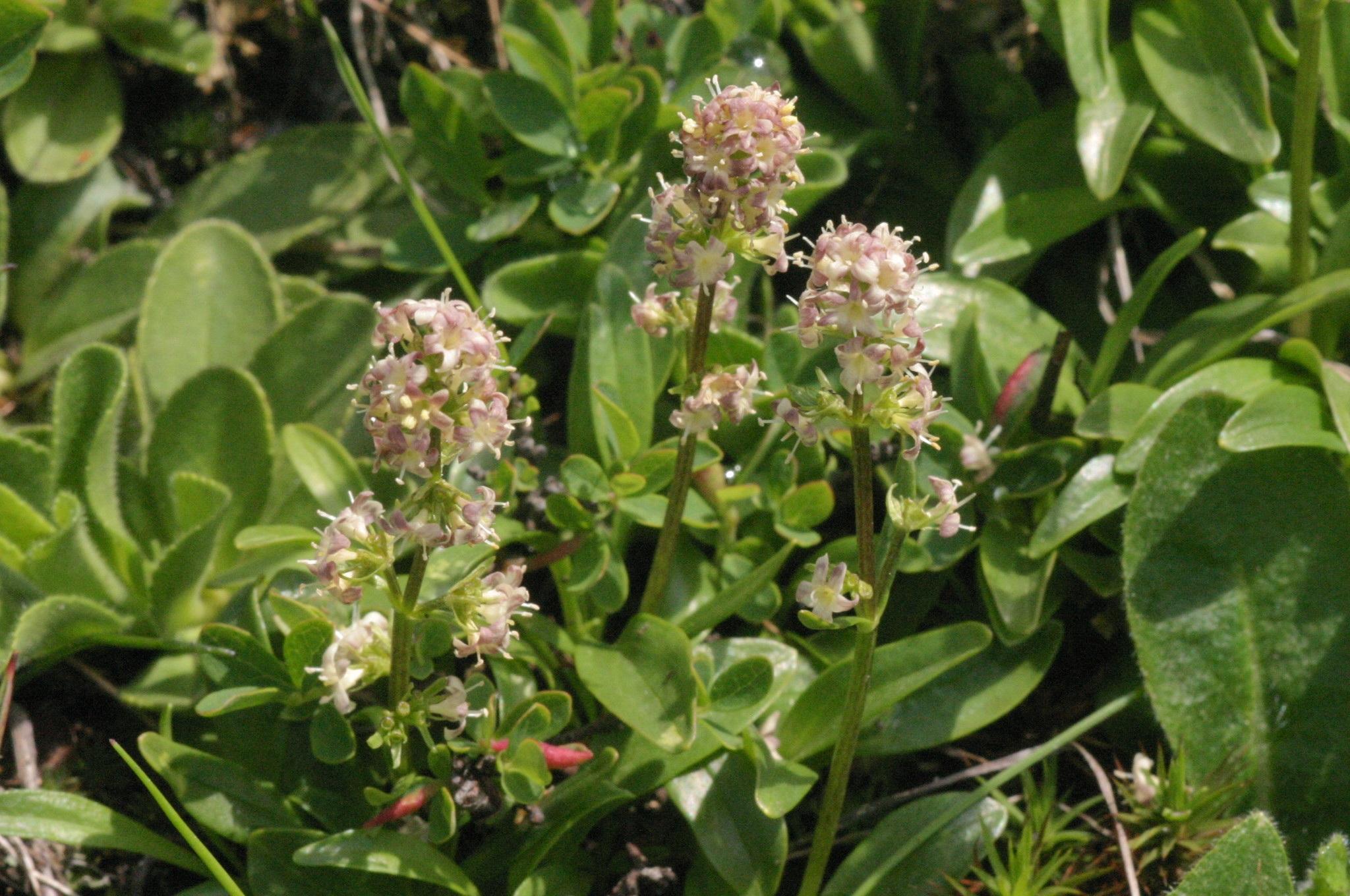 Gratuites fleur Floraison herbe produire arbuste