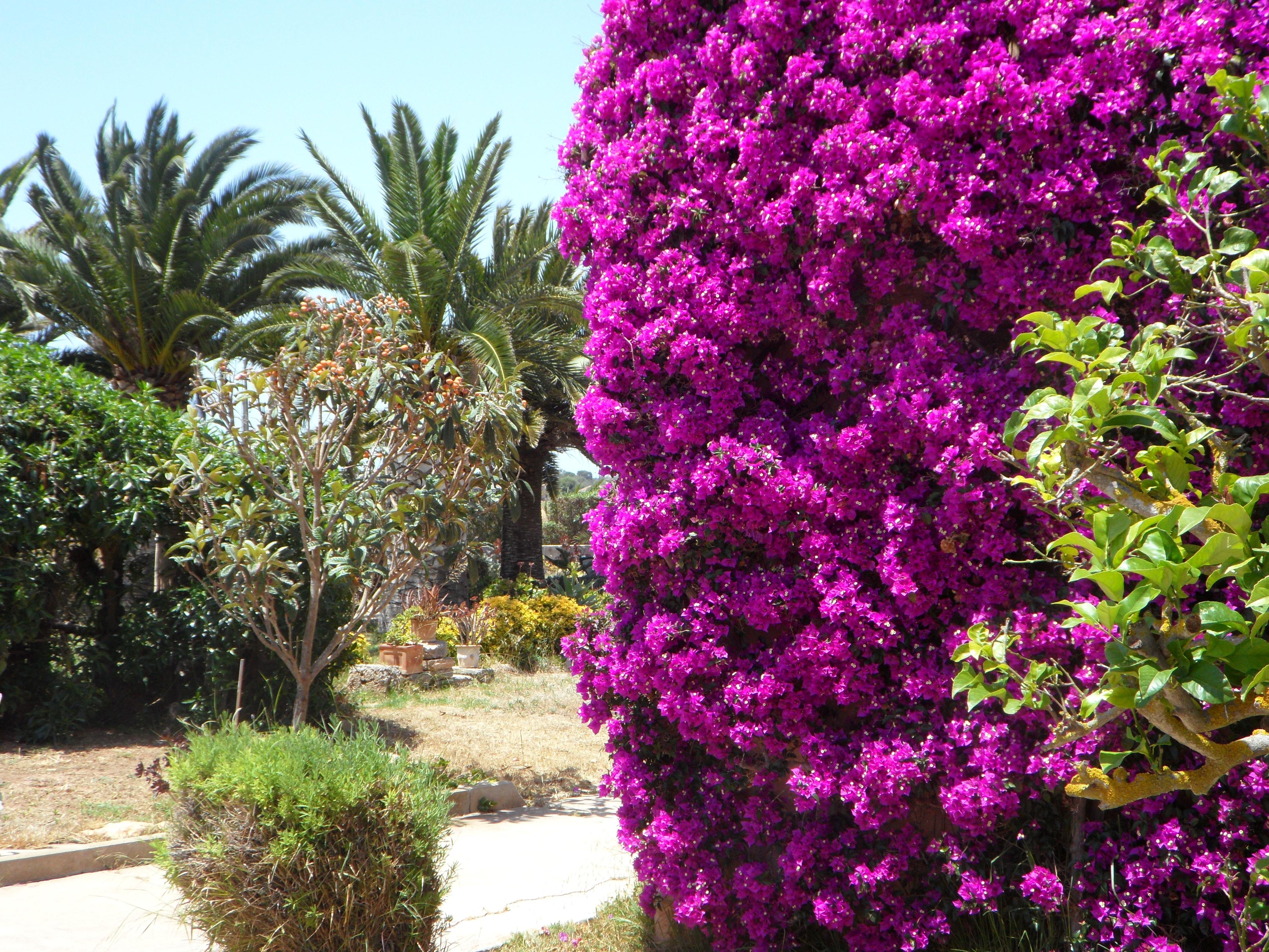 Arbustos perennes con flor rbol rama flor planta hoja - Arbustos perennes con flor ...