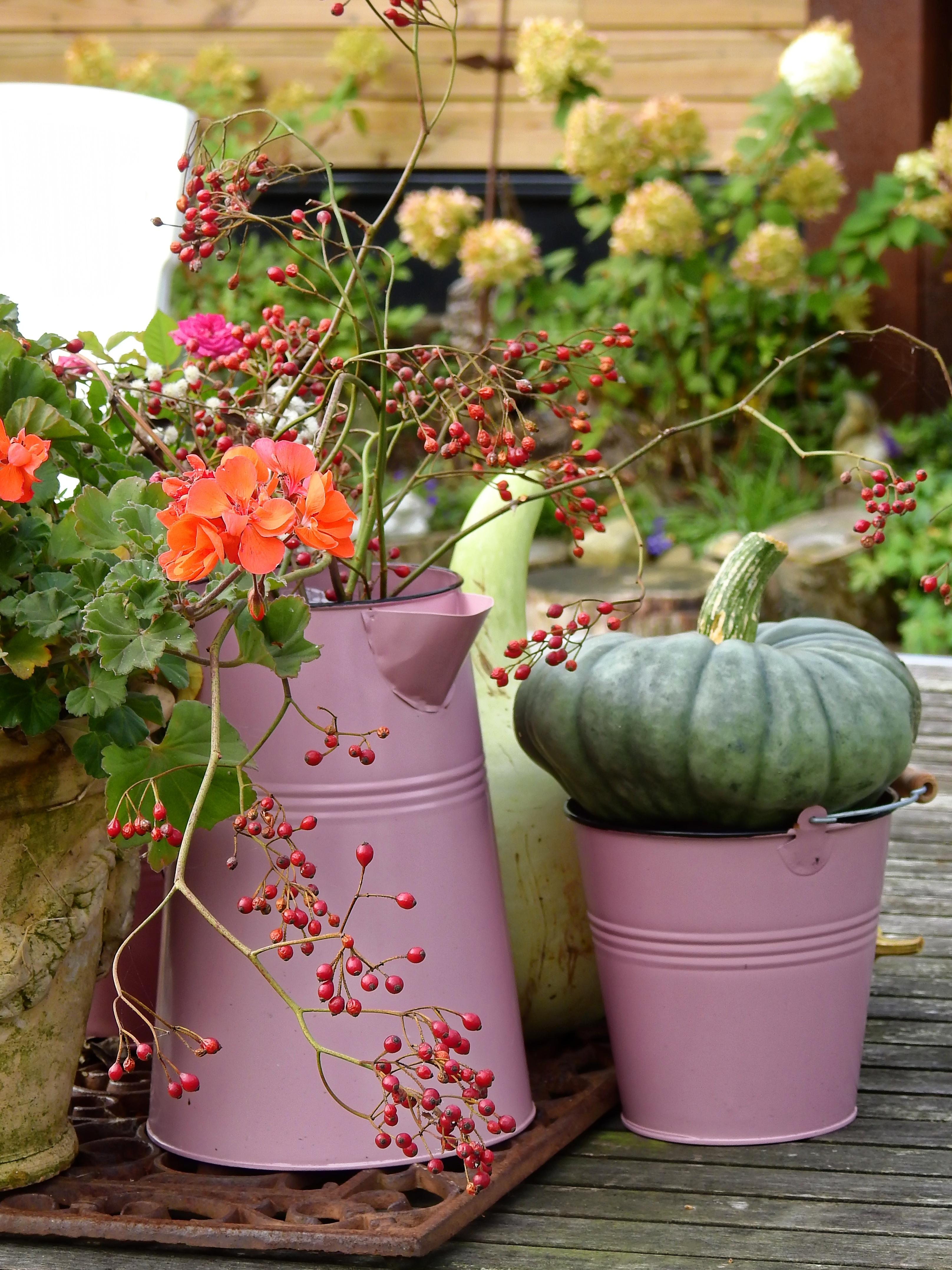 Images gratuites floraison th i re d coration citrouille jardin rose seau d co for Decoration jardin pot