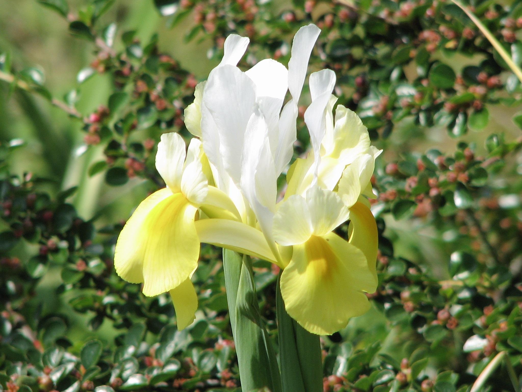 Images gratuites fleur botanique jaune jardin flore for Plante jaune