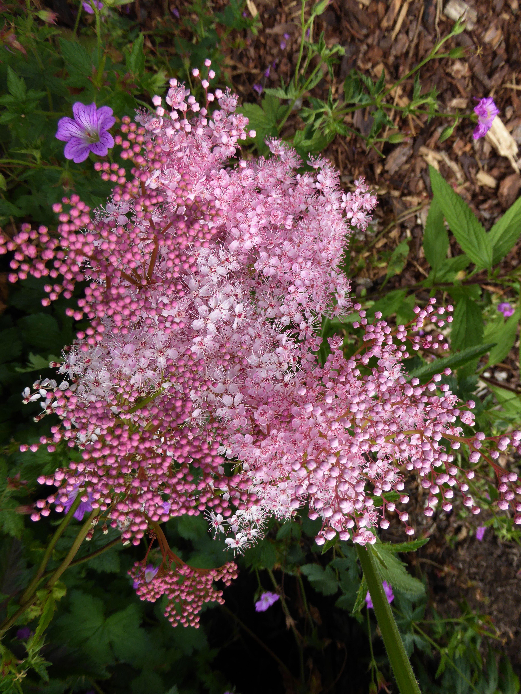 images gratuites : fleur, buisson, printemps, macro, botanique