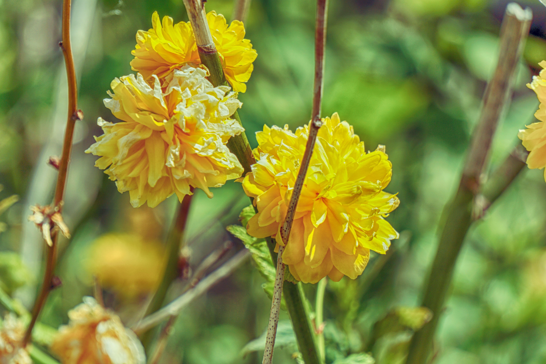 Images Gratuites Fleur Aliments Produire Couleur Botanique
