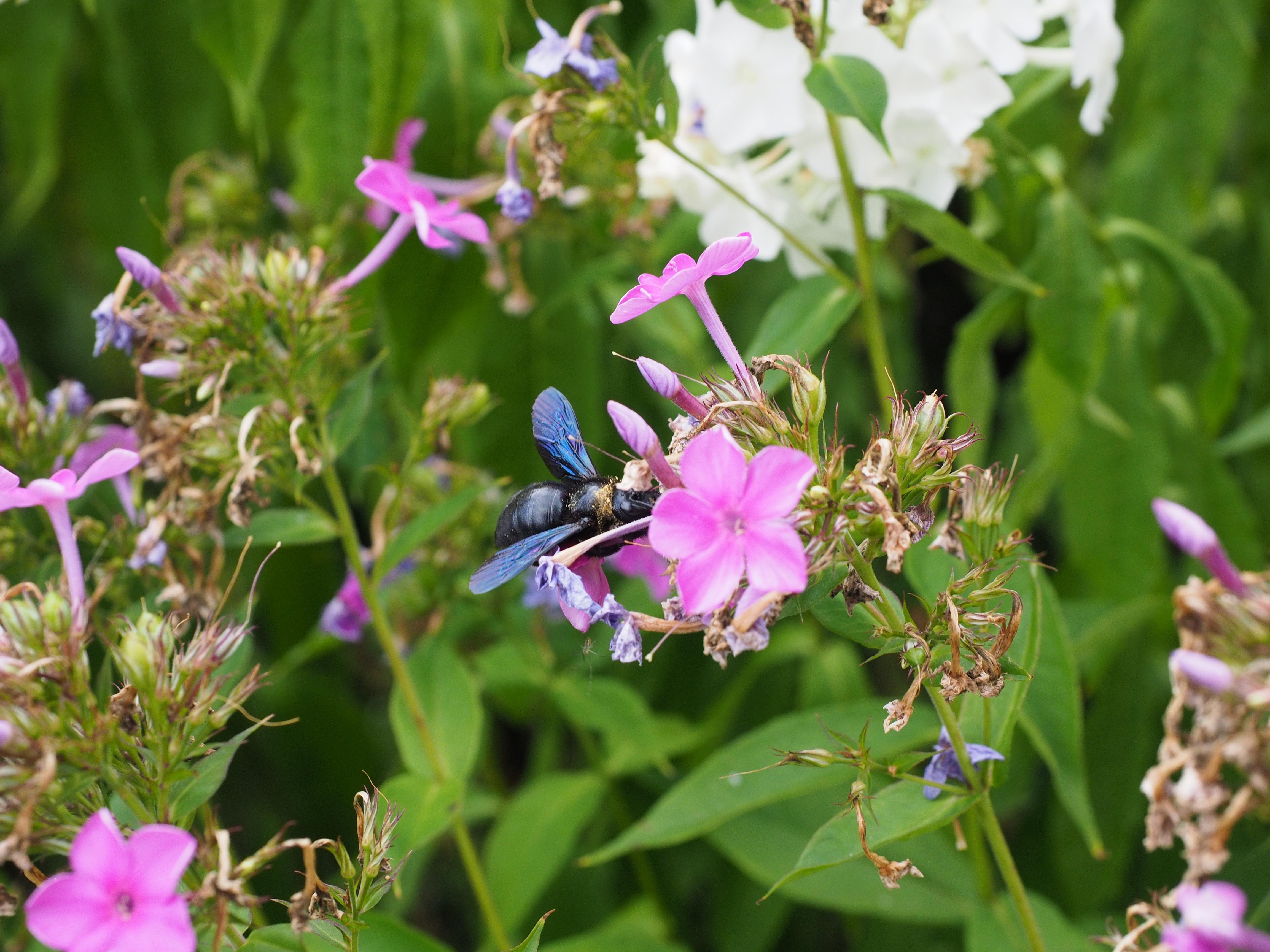 Images Gratuites Fleur Herbe Insecte Botanique Flore