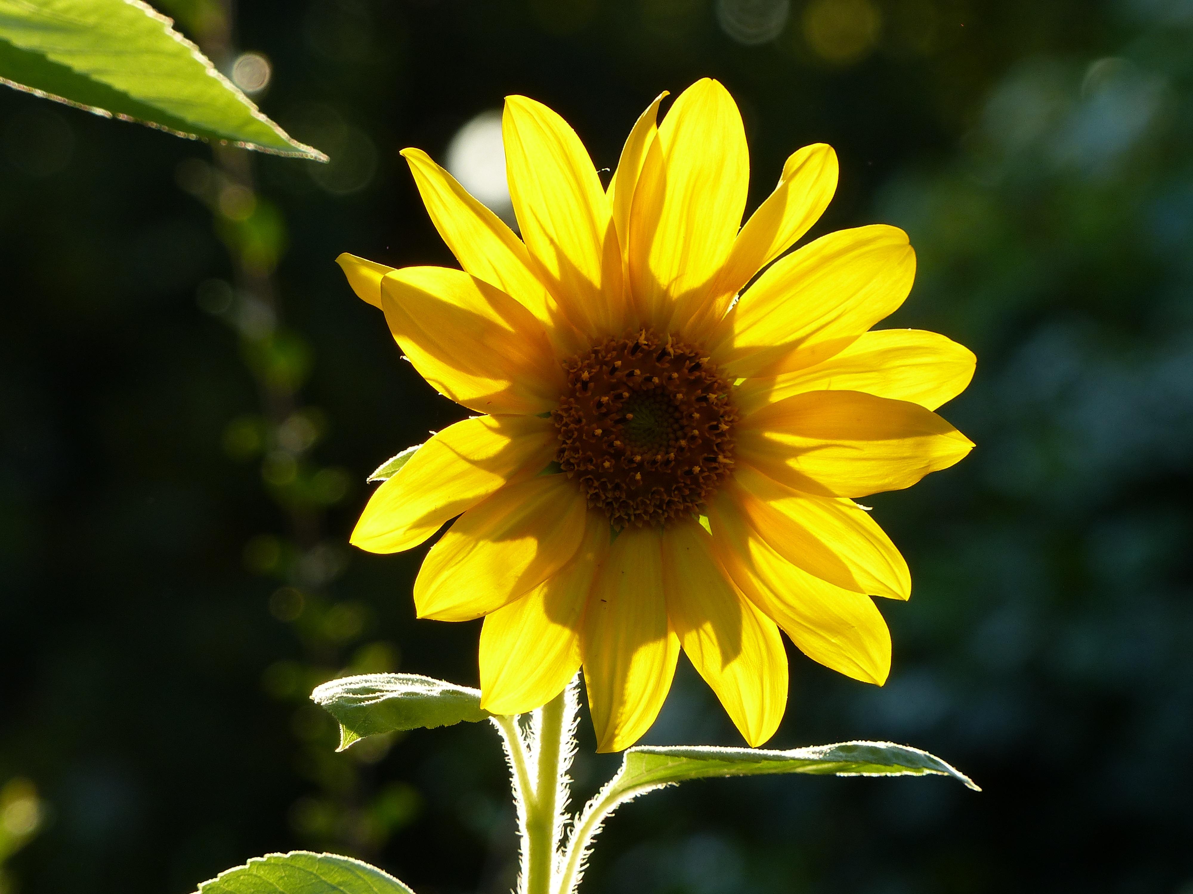 Images Gratuites : pétale, Floraison, l\'automne, botanique, flore ...