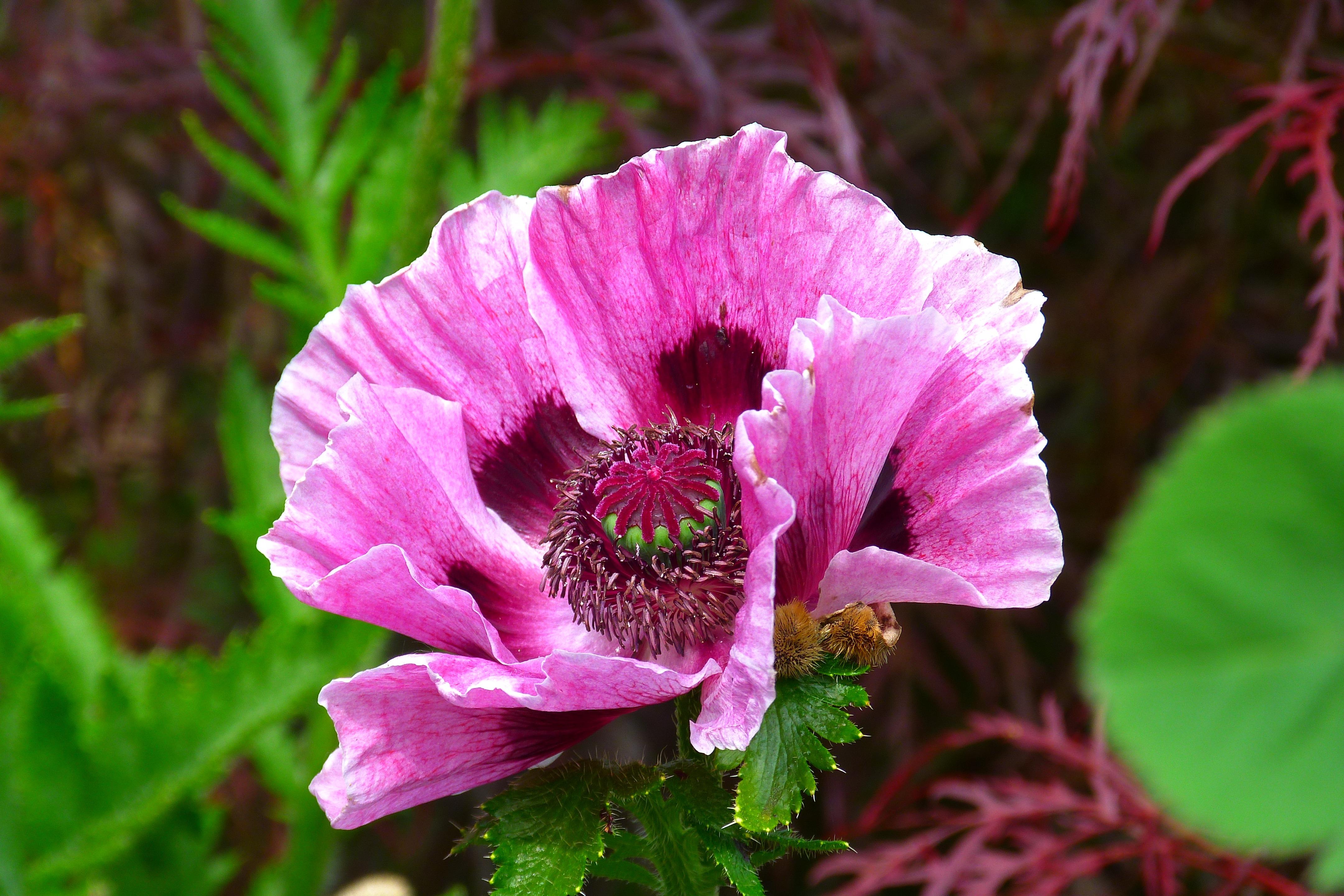 Дикие цветы фото