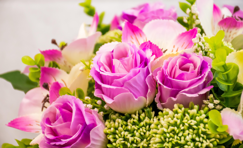 Images gratuites fleur p tale floraison rose flore for Bouquet de fleurs humour