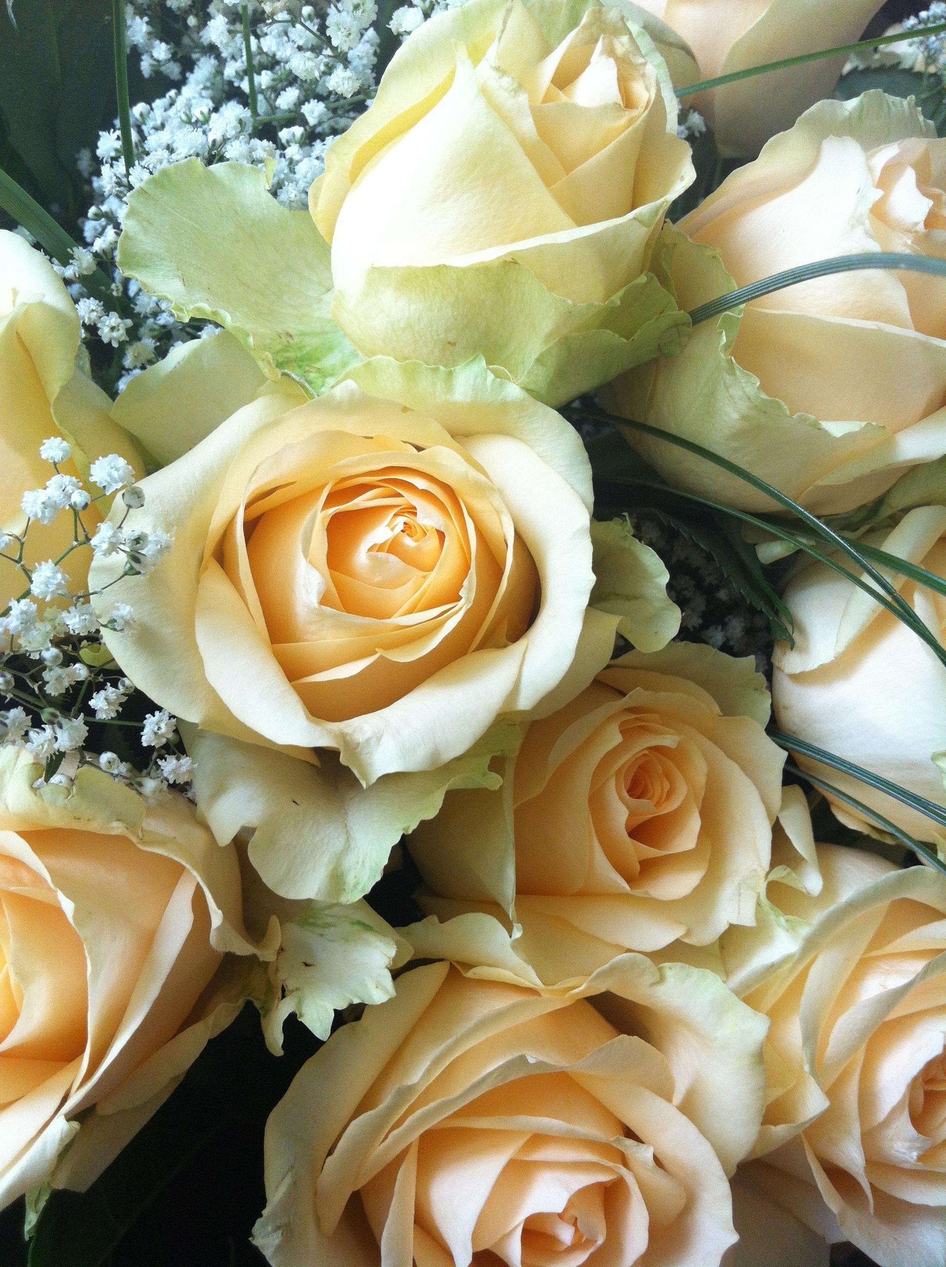 открытки красивые цветы розы телевидение полный