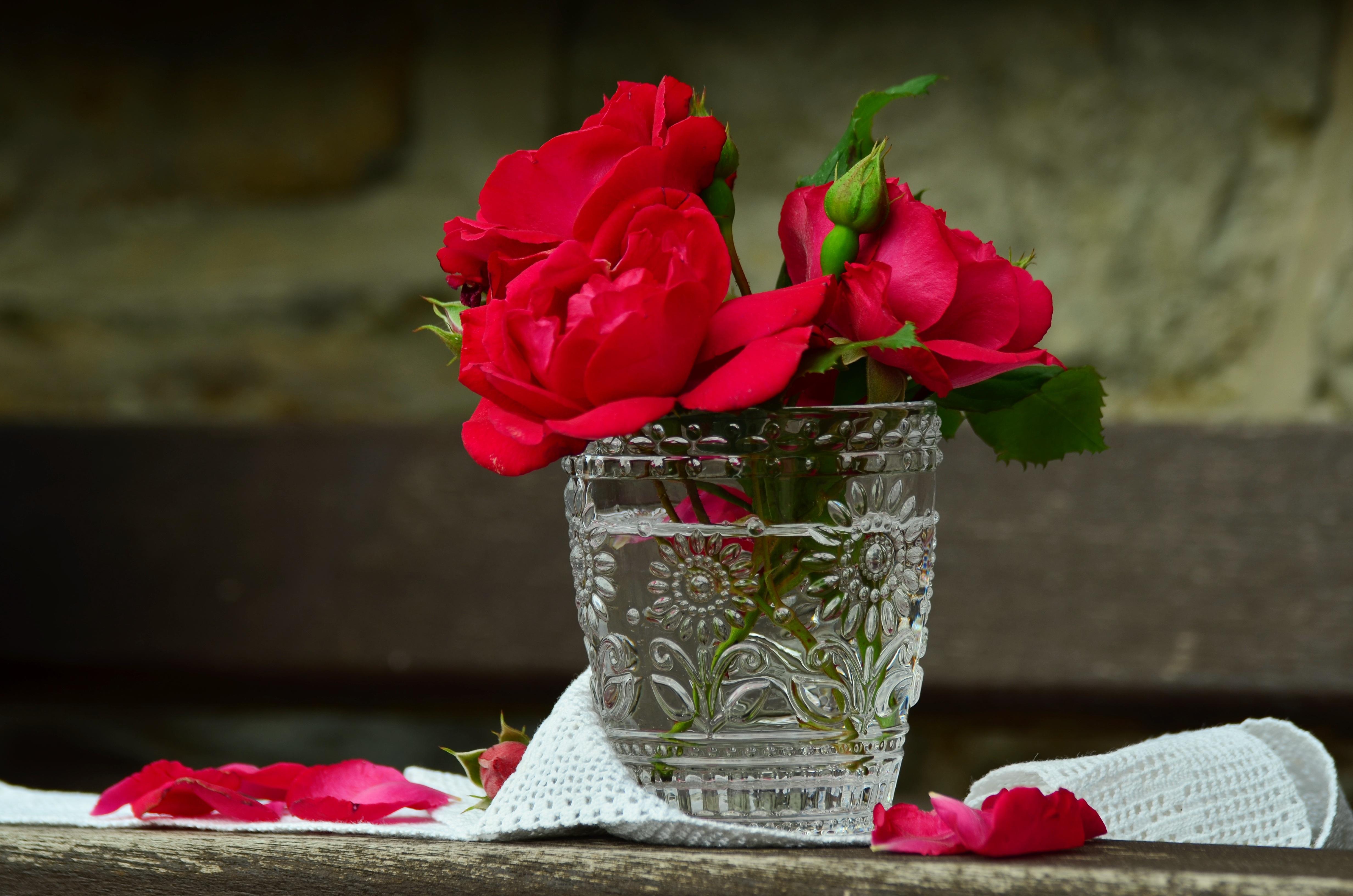 Free Images Blossom Petal Glass Love Romantic Pink Close
