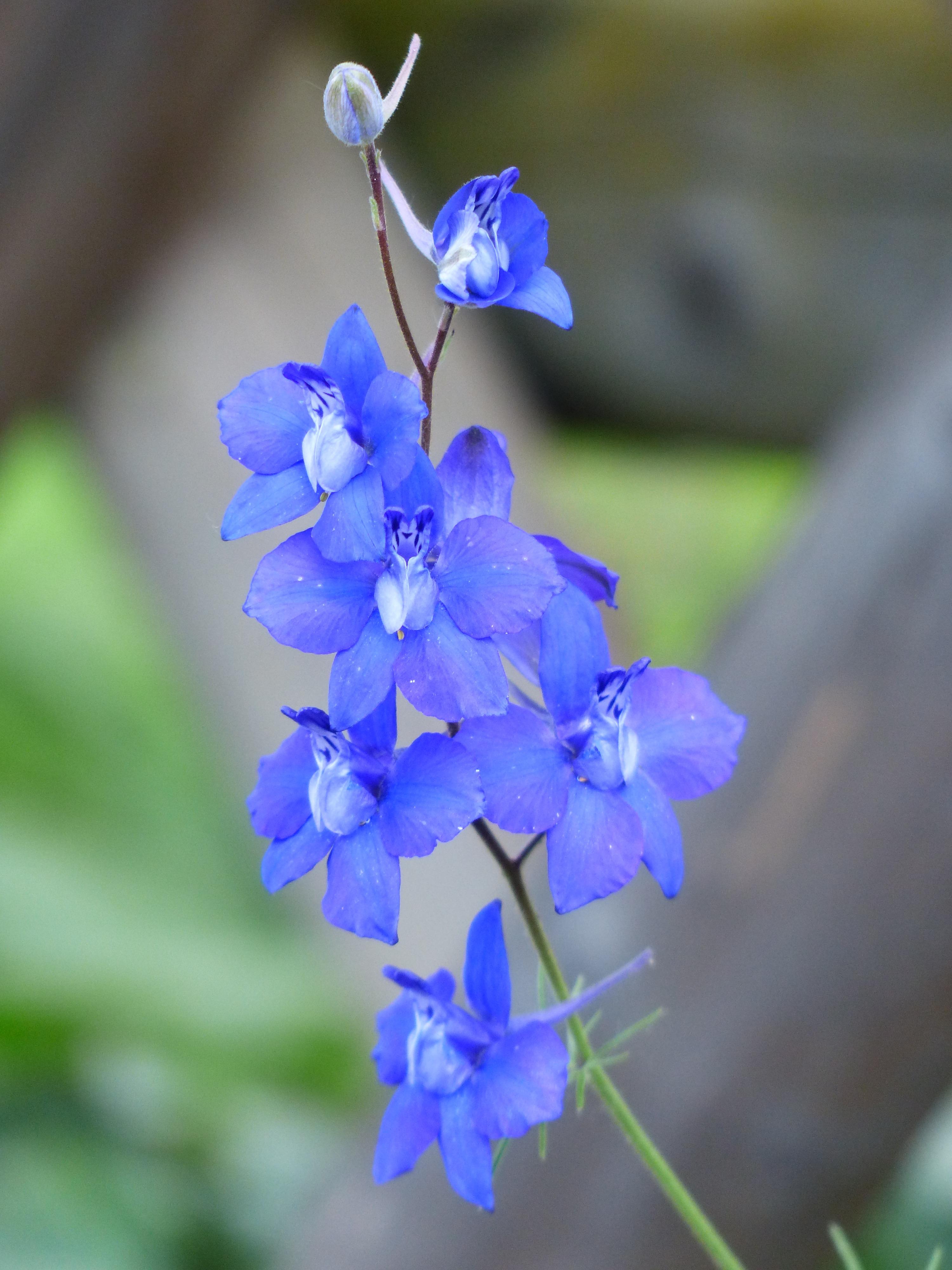 Flower Embellishment ~DELPHINIUM PETALS~Blue 40p