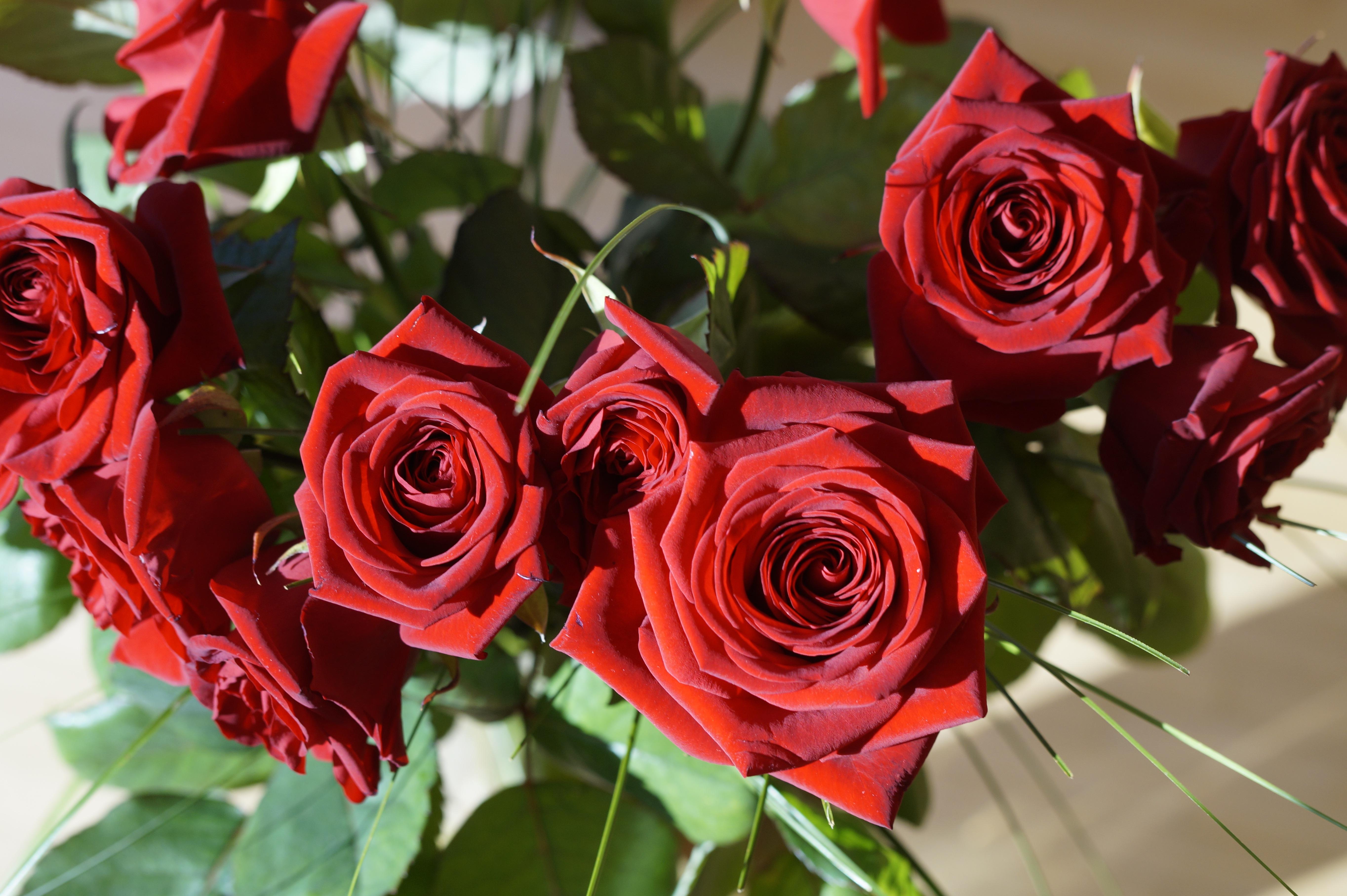Images Gratuites Fleur Petale Floraison Amour Romance