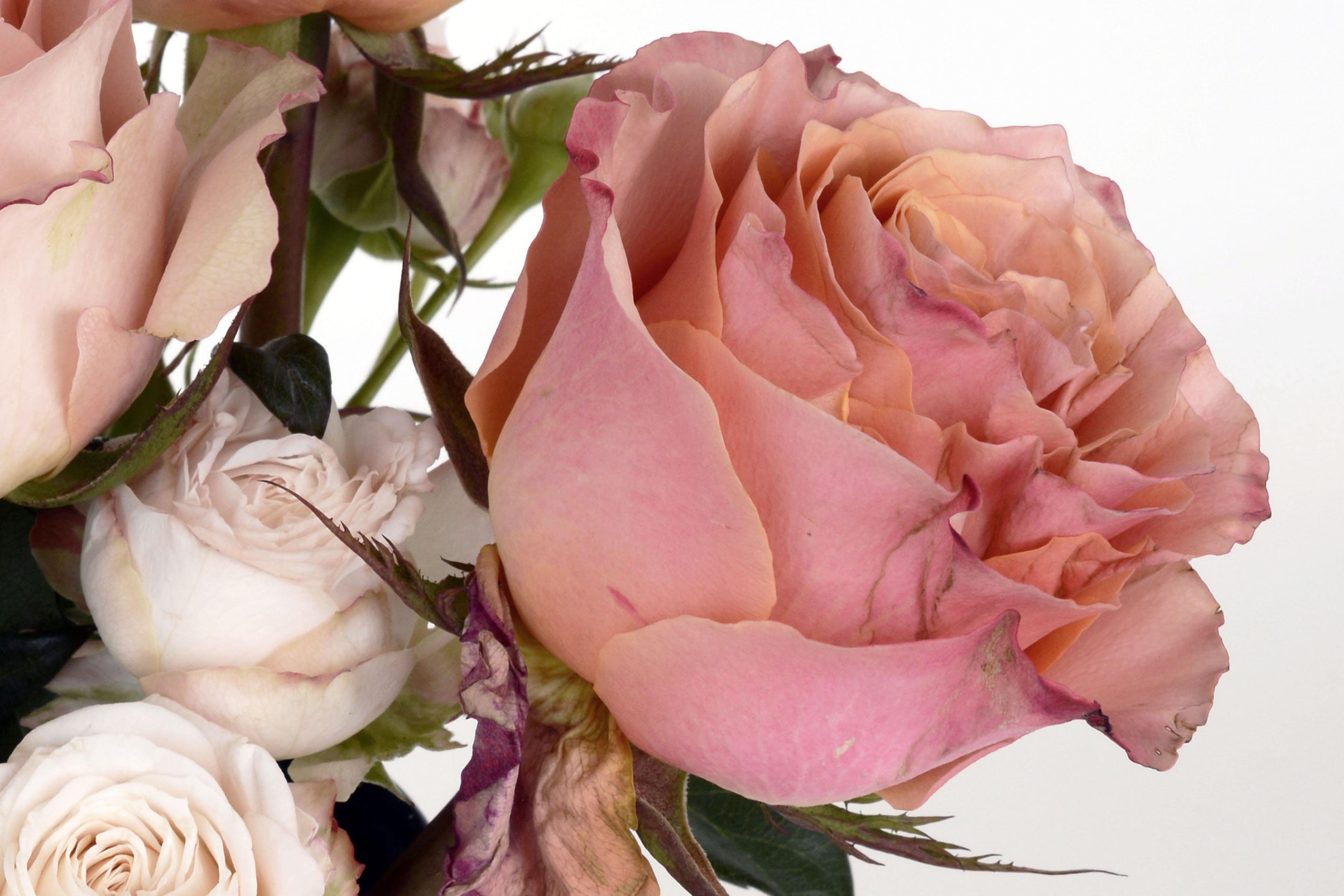 закат пляже, розы цвета лосося фото просите моделей
