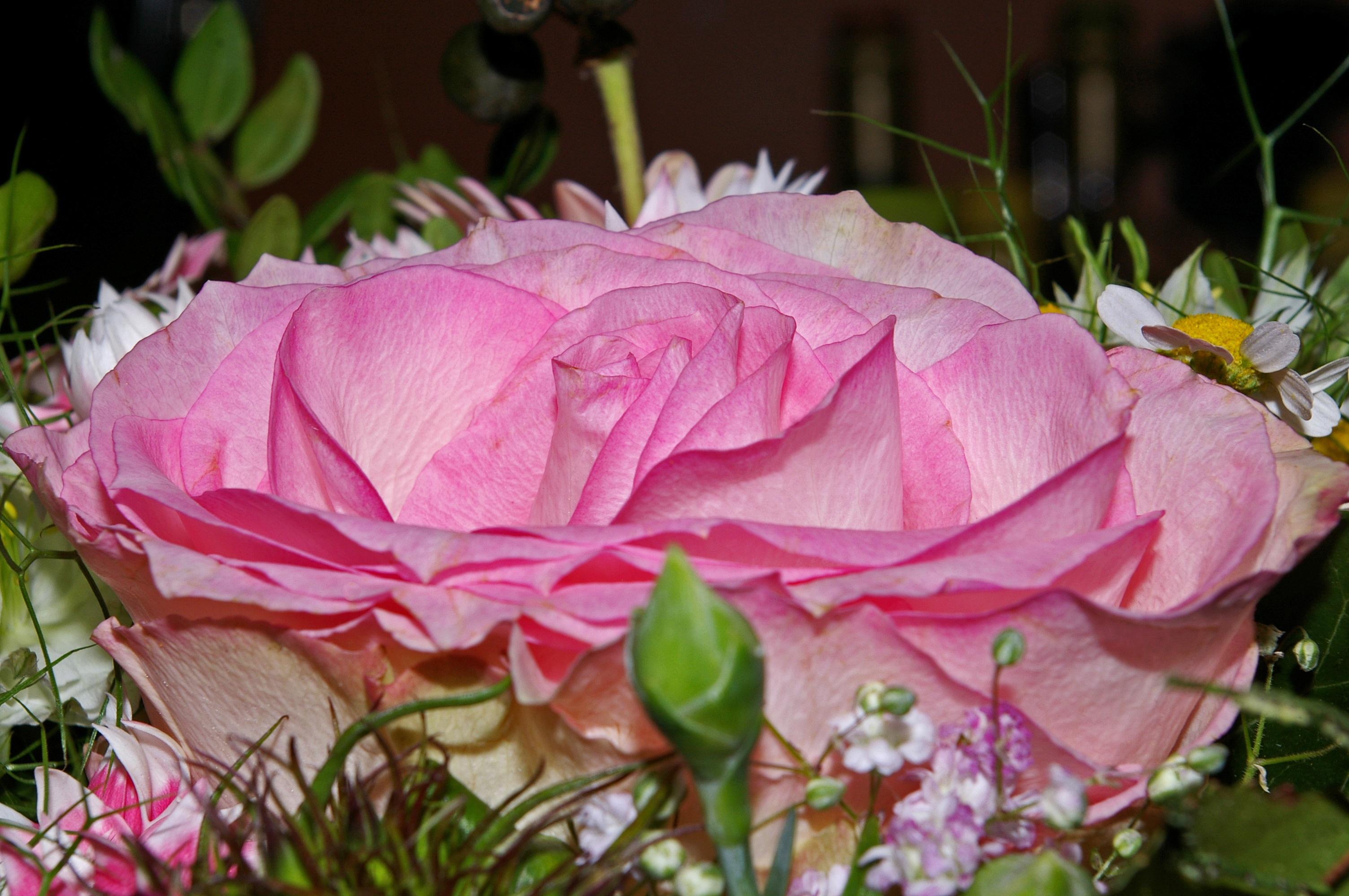 Картинка любимой цветы