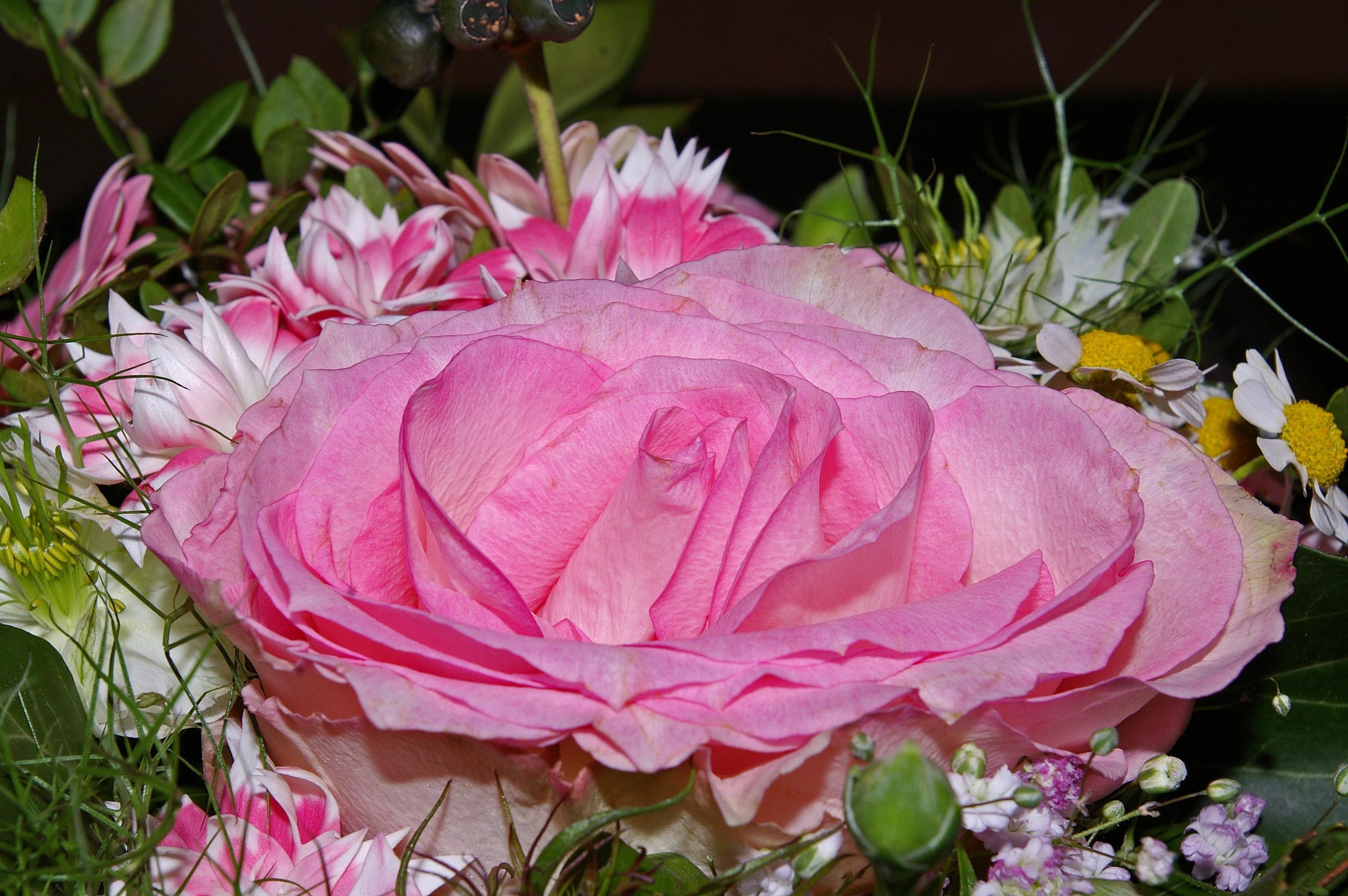 Free images blossom petal vase romance romantic close free images blossom petal vase romance romantic close flowers petals beauty beautiful pink rose birthday bouquets floristry peony izmirmasajfo