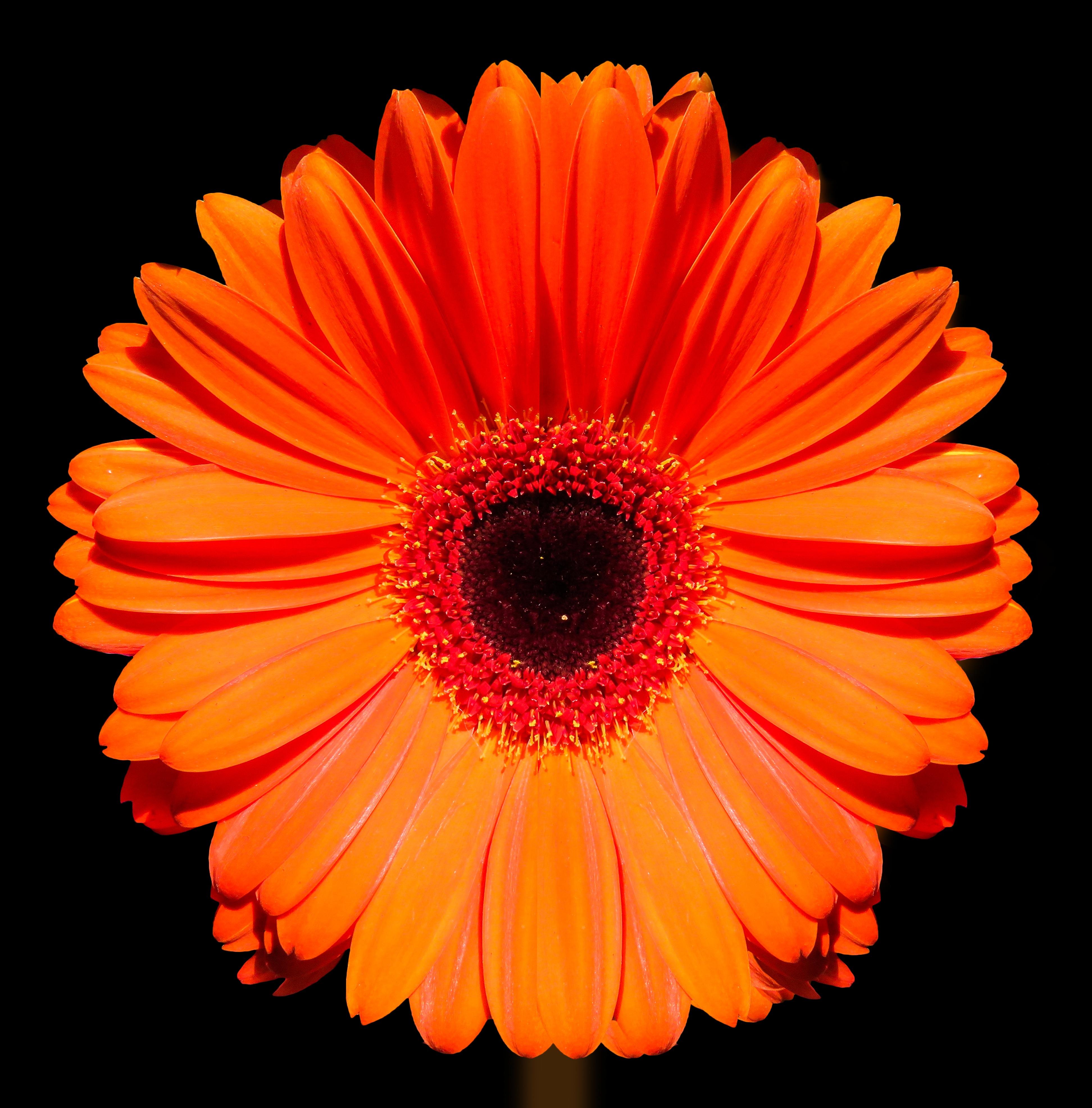 оранжевый цветочек картинка идёт