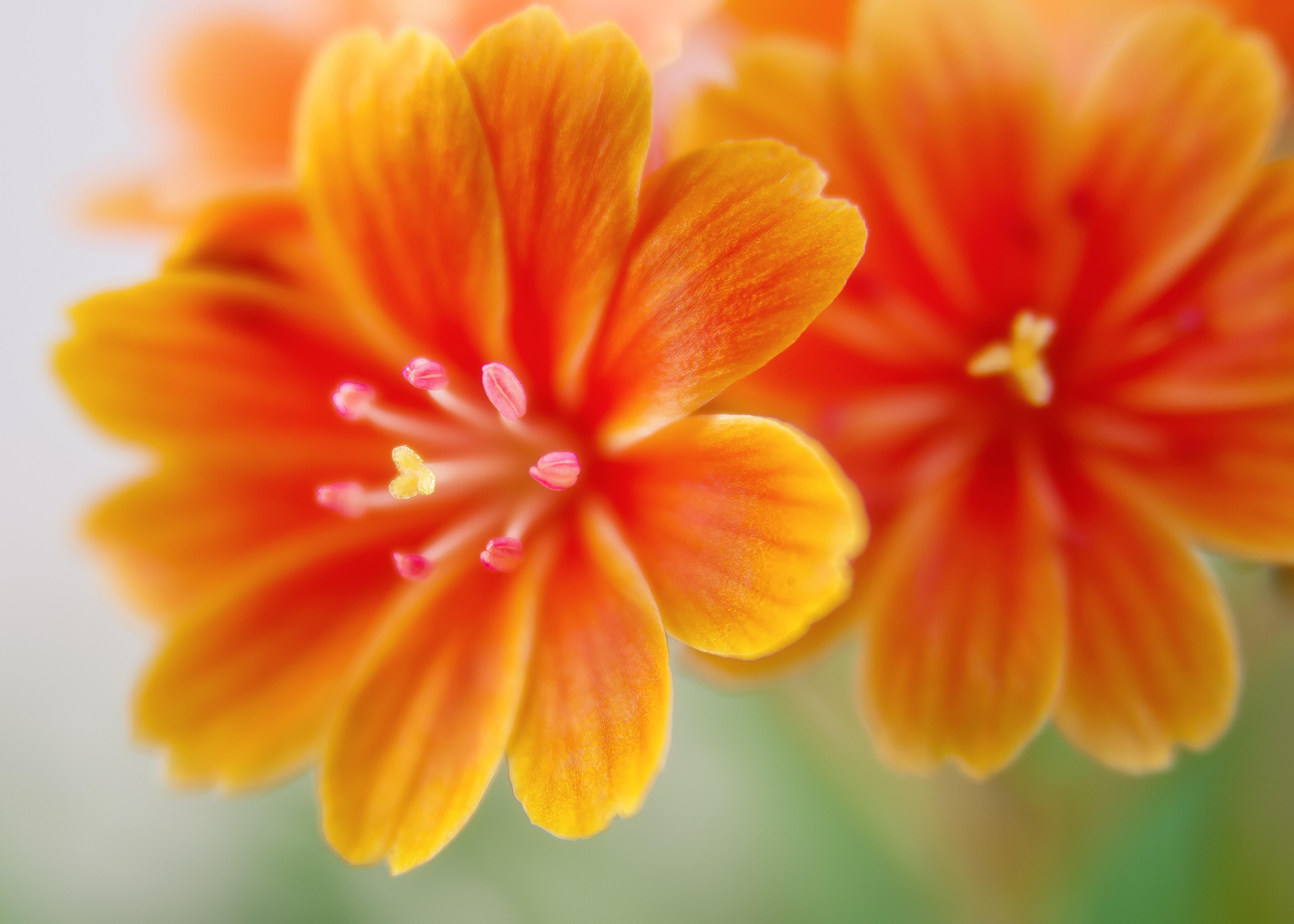 Free Images Blossom Flower Petal Bloom Spring Flora Close Up
