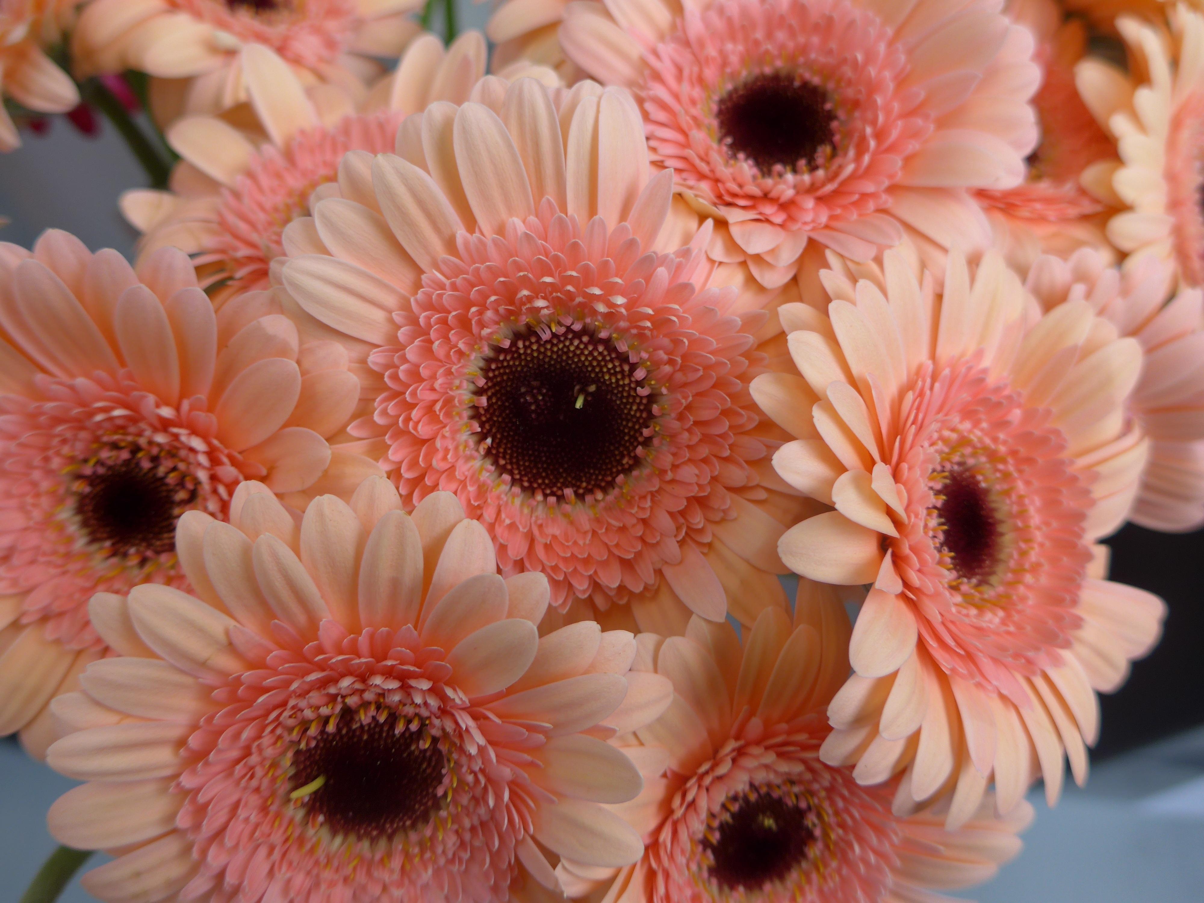 Free Images Blossom Petal Bloom Orange Spring Pink Florist