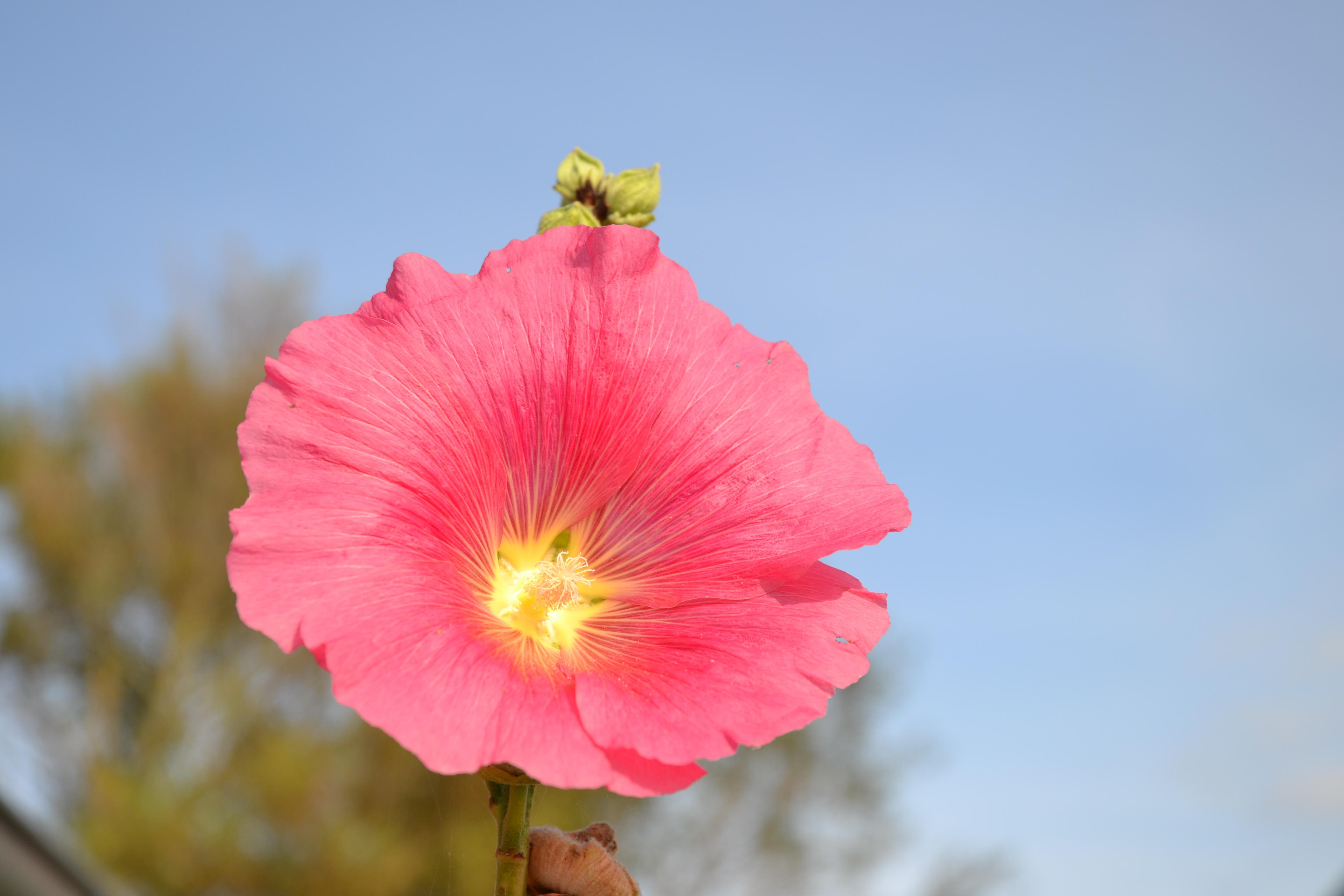 images gratuites : fleur, pétale, floraison, fermer, flore