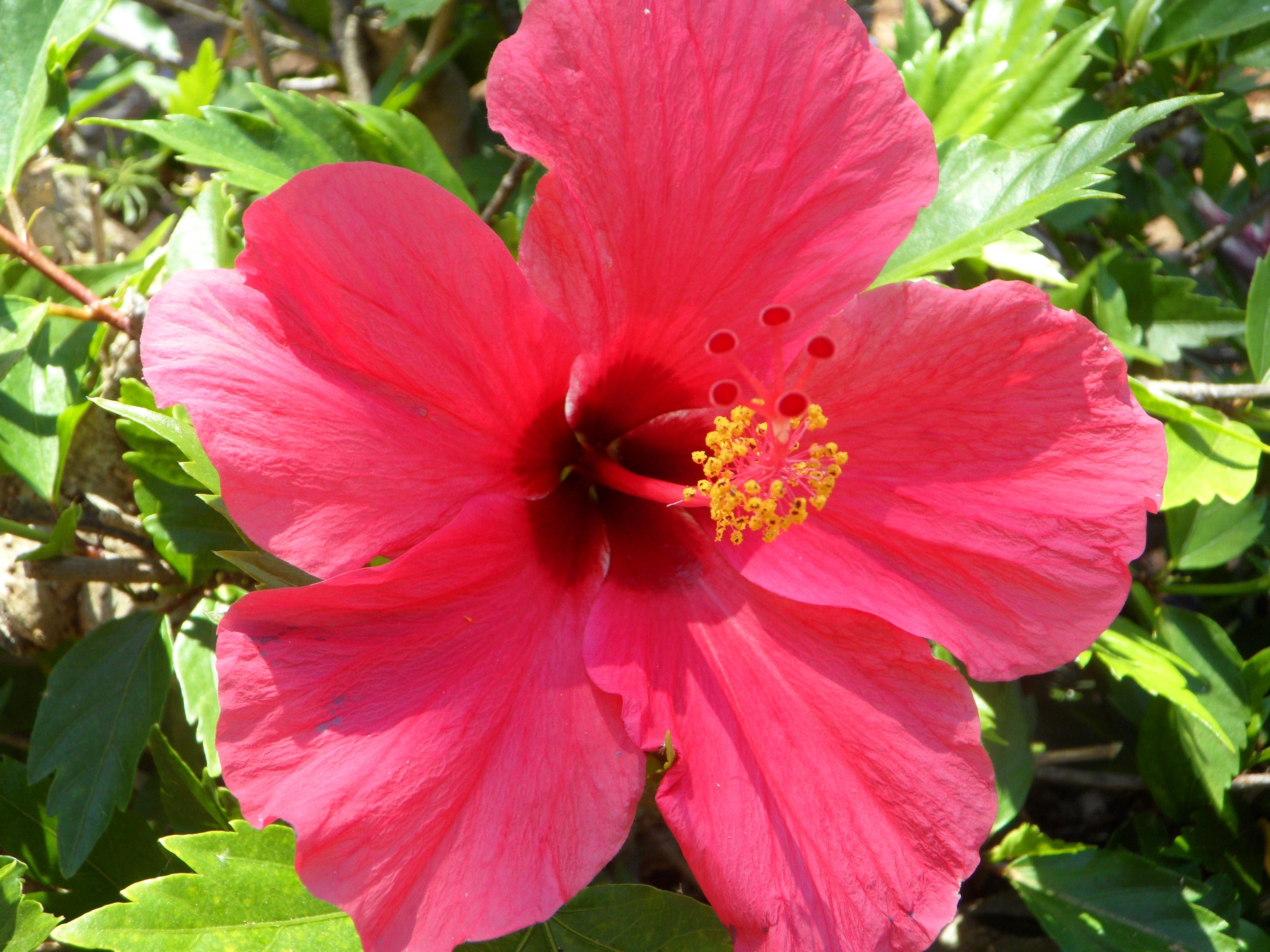 Gratis billeder kronblad flor pollen frim rke have for Que significa plantas ornamentales