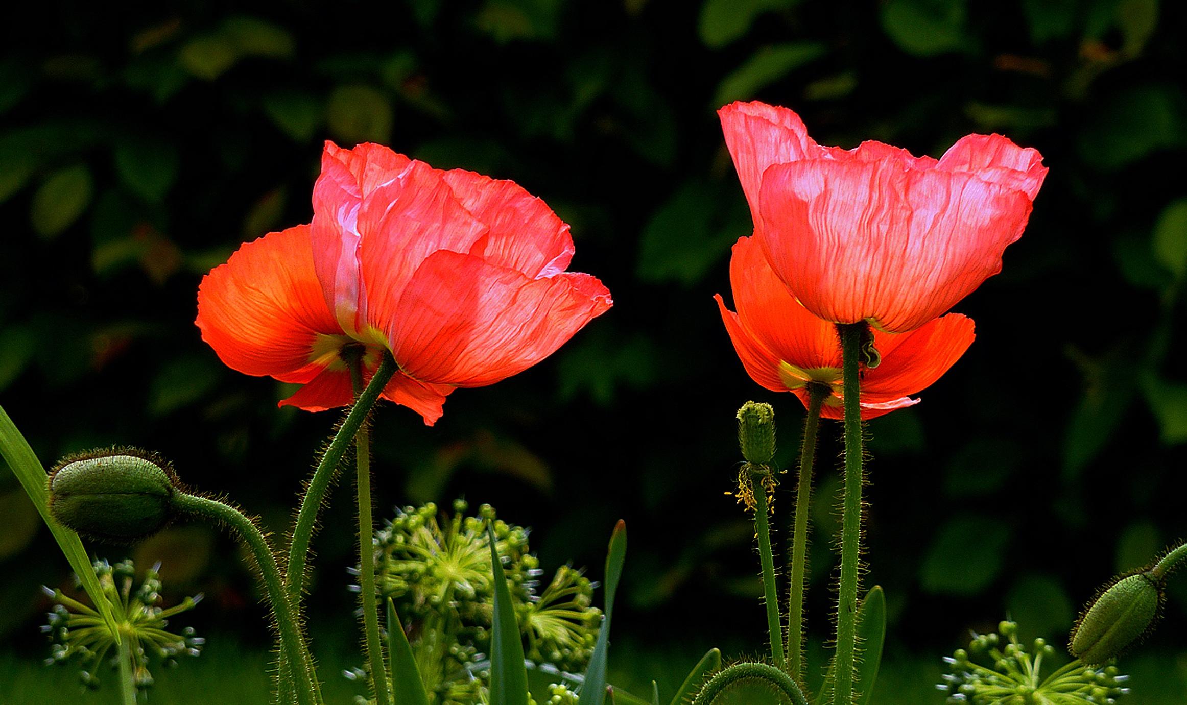 free images blossom petal bloom botany flora wildflower