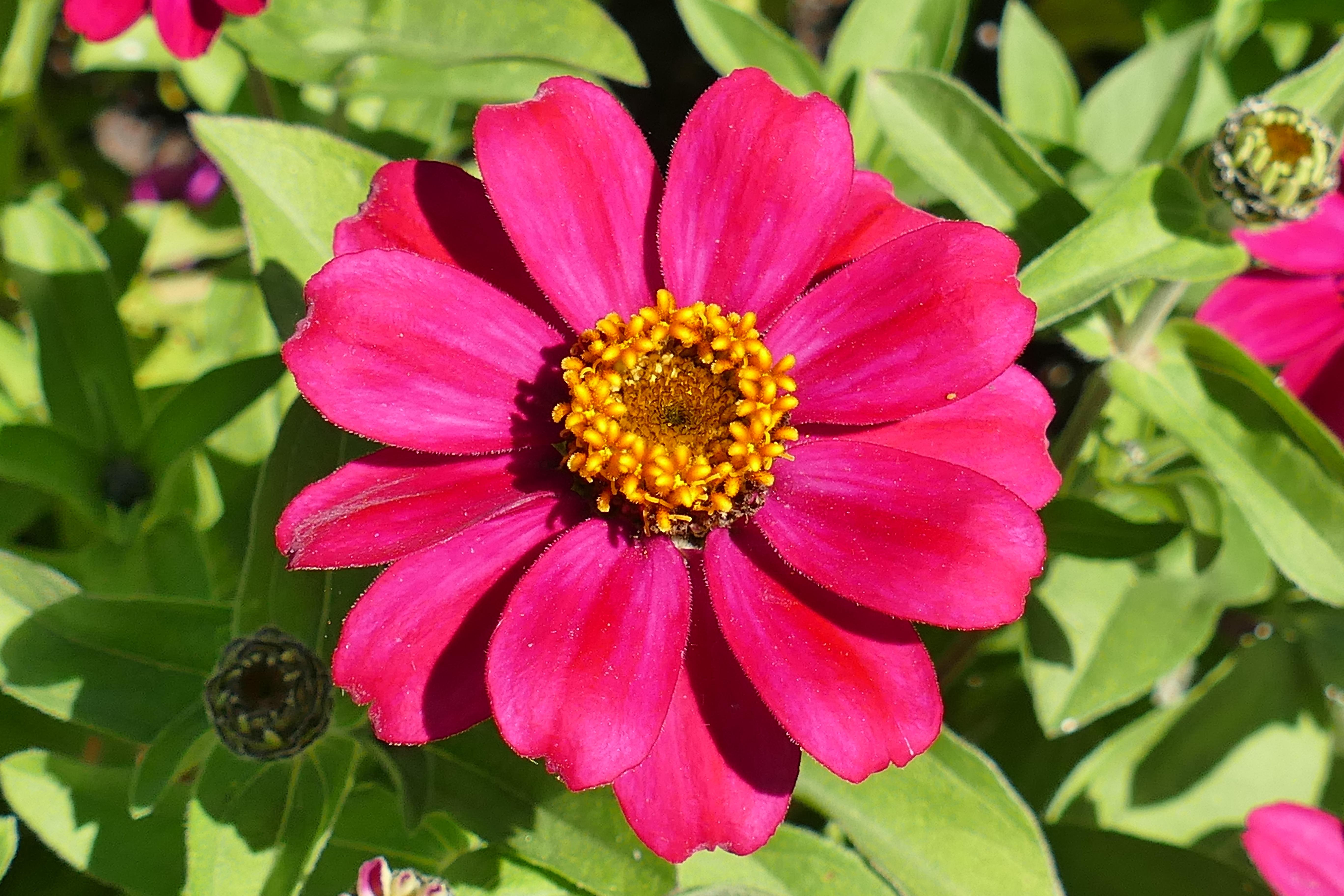 майоры цветы фото название известны своей чистоплотностью
